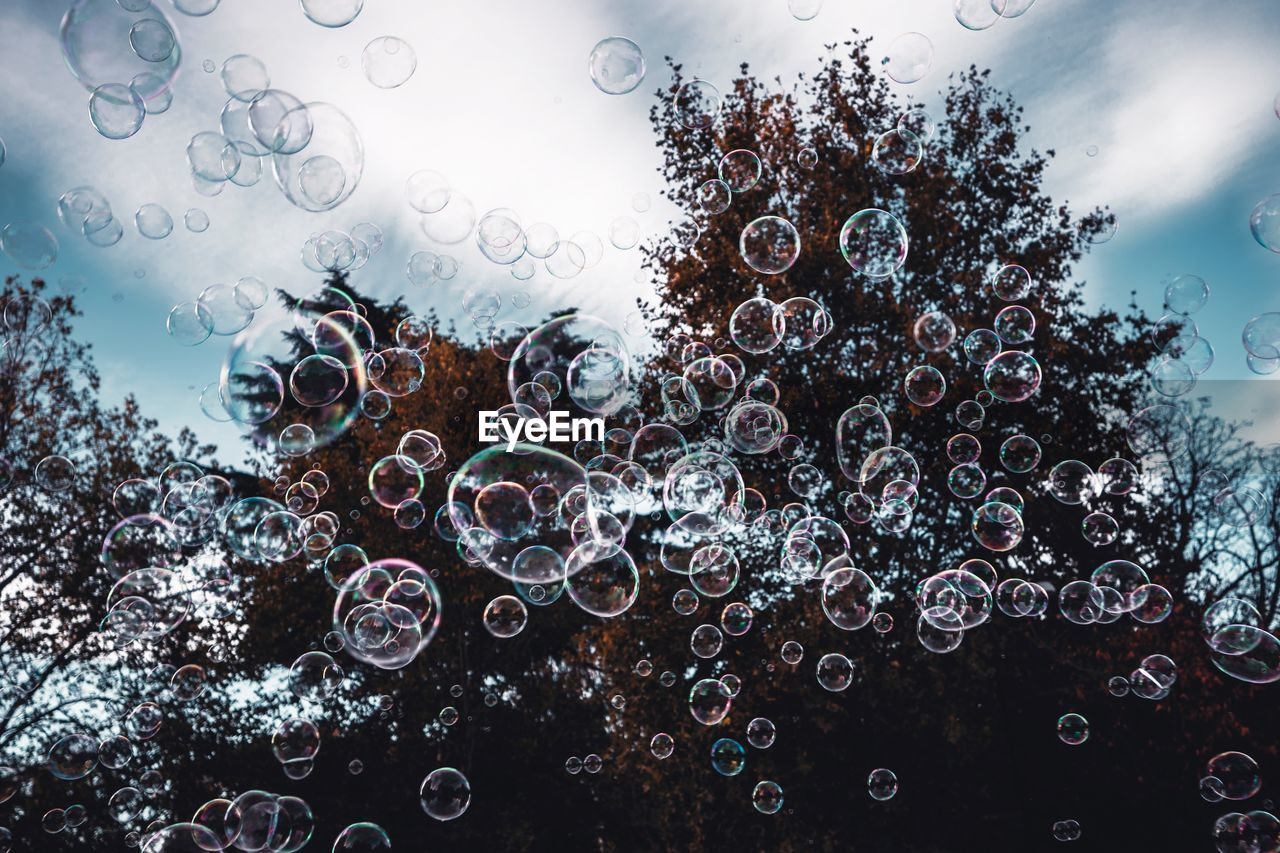 bubble, sky, nature, tree, plant, no people, low angle view, fragility, day, vulnerability, outdoors, growth, cloud - sky, close-up, soap sud, water, transparent, drop, beauty in nature, digital composite, raindrop