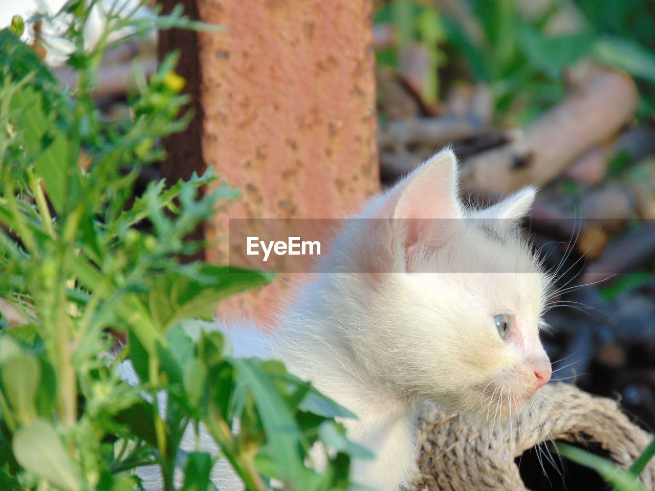 mammal, animal themes, one animal, animal, vertebrate, pets, domestic, domestic animals, feline, cat, plant part, close-up, domestic cat, leaf, plant, no people, nature, day, focus on foreground, outdoors, whisker, animal head