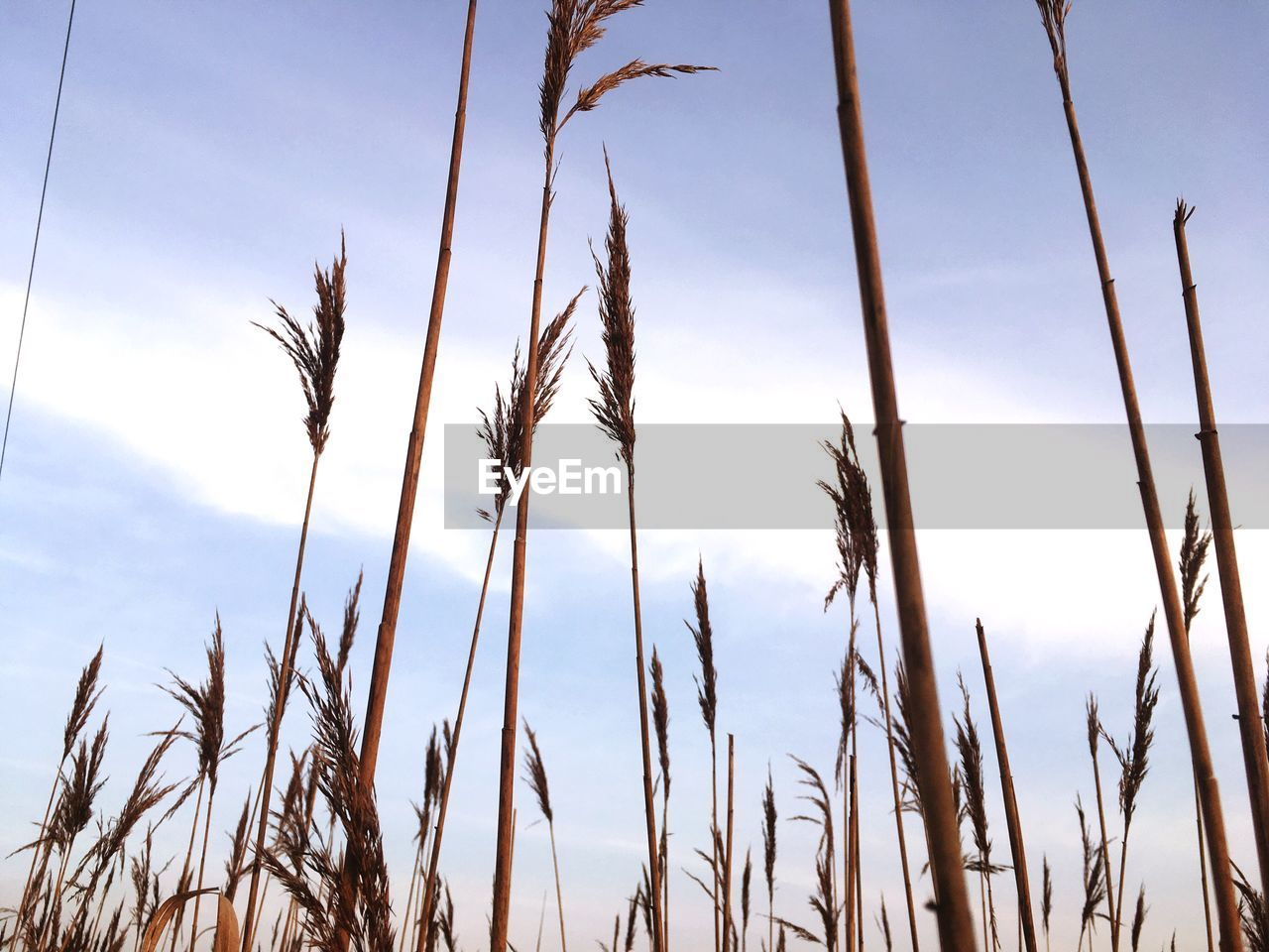 LOW ANGLE VIEW OF PLANTS GROWING IN FIELD AGAINST SKY