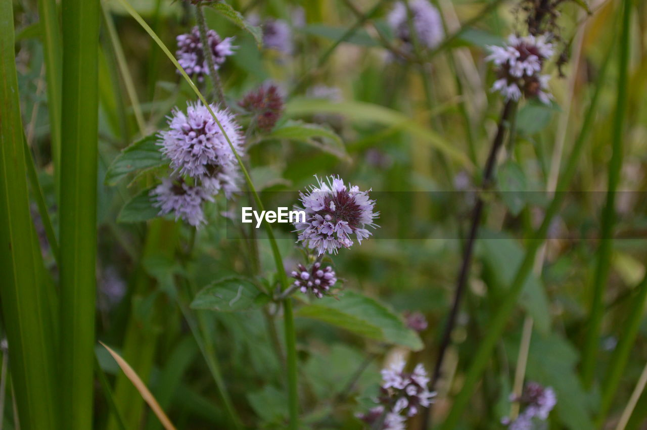 flower, growth, nature, plant, fragility, freshness, flower head, petal, blooming, beauty in nature, no people, outdoors, day, close-up