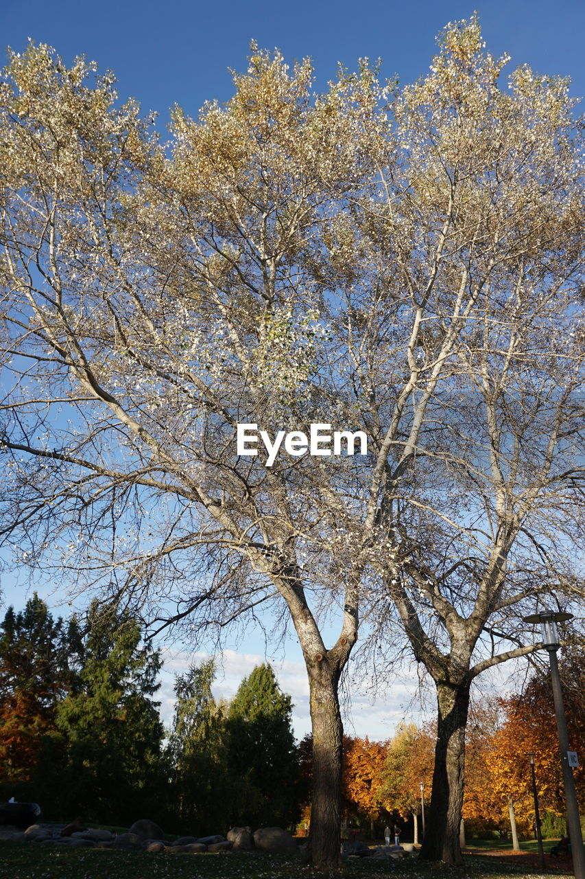 tree, branch, growth, beauty in nature, nature, day, outdoors, sky, no people, tranquility, low angle view, scenics, clear sky, bare tree, freshness
