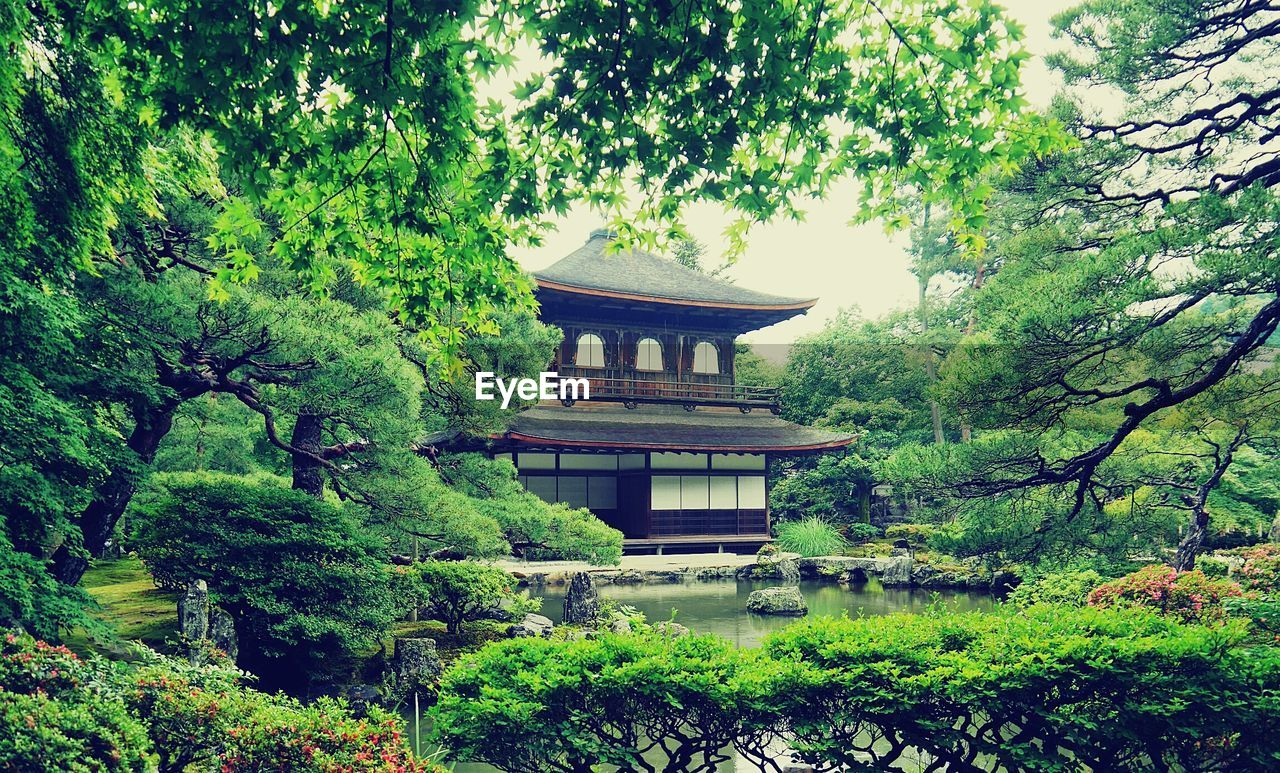 tree, growth, architecture, green color, building exterior, built structure, nature, tradition, eaves, traditional building, no people, roof, plant, day, outdoors, beauty in nature, branch