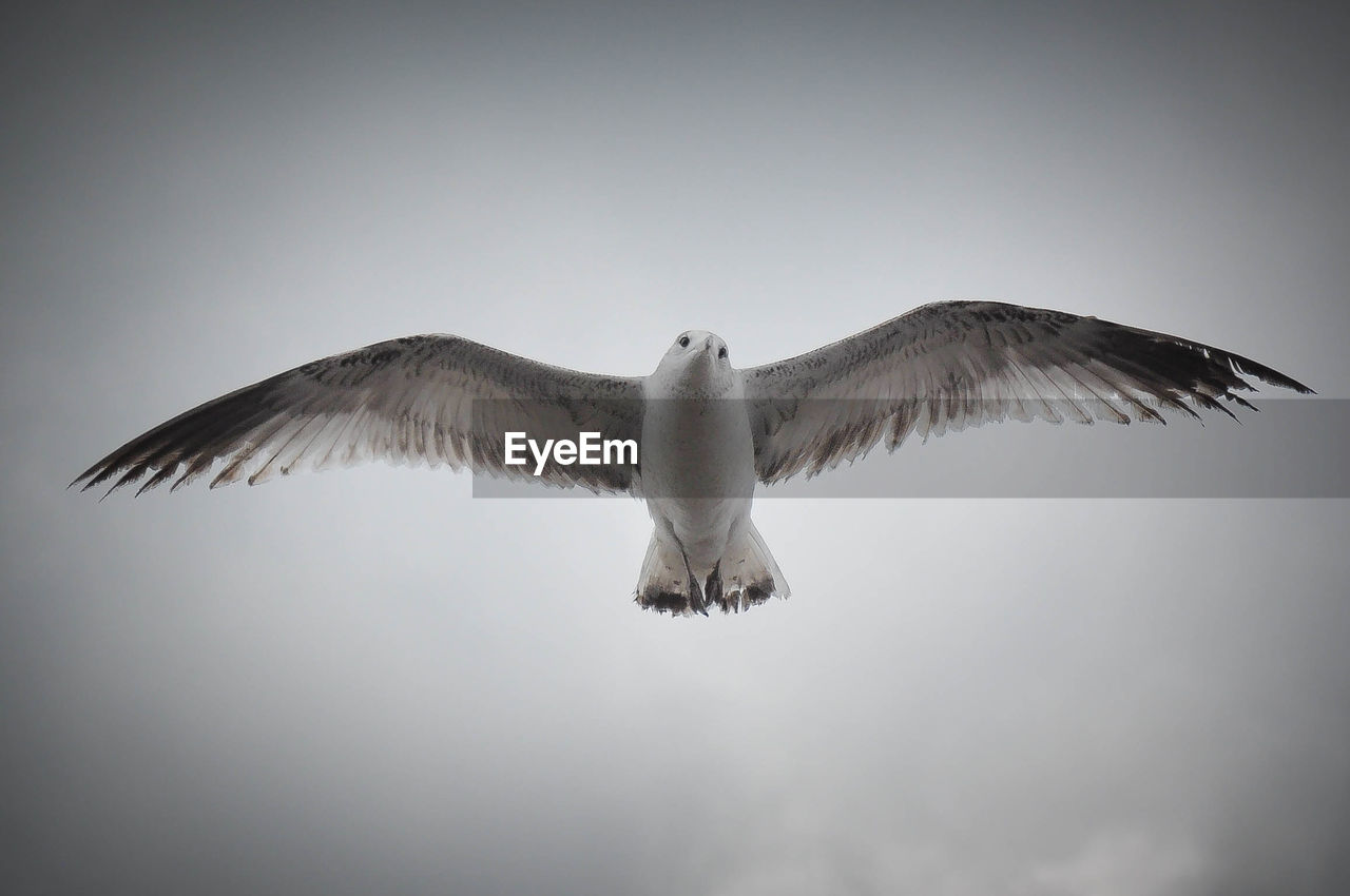 Low angle view of seagull against cloudy sky