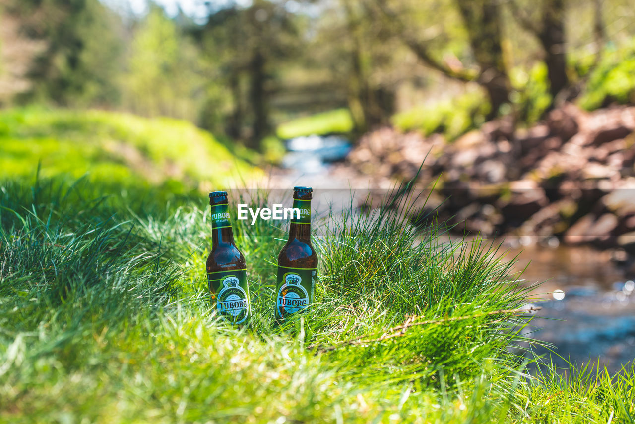 plant, grass, day, growth, nature, selective focus, green color, land, bottle, container, sunlight, field, focus on foreground, outdoors, no people, water, close-up, tree, food and drink, drink