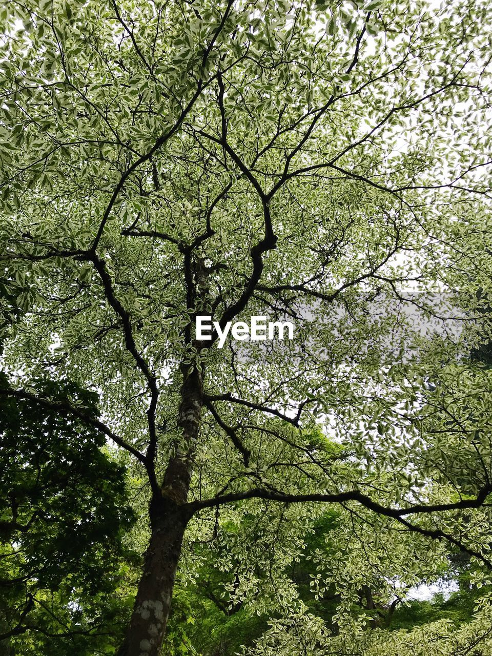 tree, plant, growth, branch, low angle view, day, nature, beauty in nature, green color, no people, full frame, tranquility, outdoors, backgrounds, land, scenics - nature, foliage, sunlight, lush foliage, forest, tree canopy, directly below