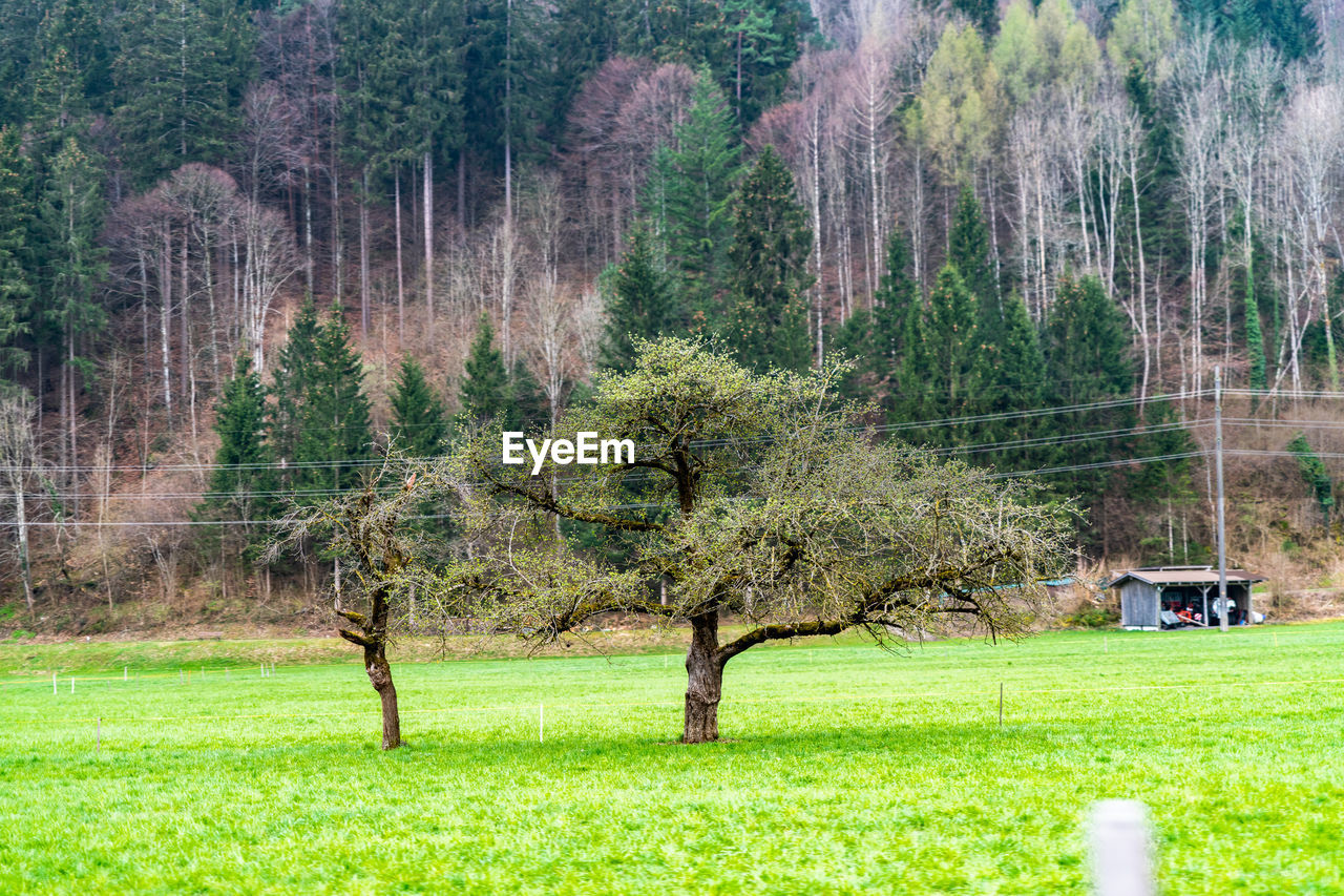 tree, plant, land, grass, landscape, green color, nature, environment, forest, scenics - nature, day, field, beauty in nature, tranquil scene, non-urban scene, tranquility, no people, growth, woodland, foliage, outdoors, pine tree, pine woodland