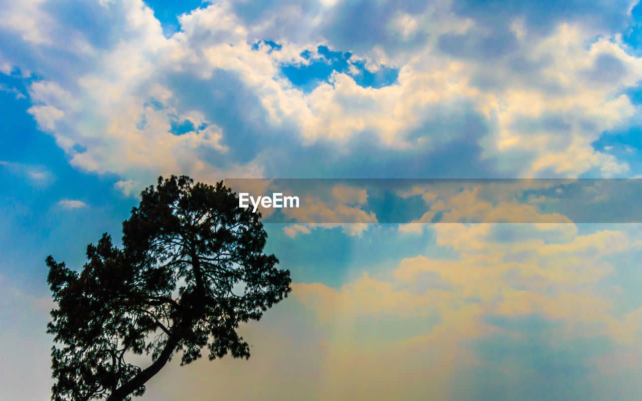cloud - sky, sky, tree, beauty in nature, plant, tranquility, low angle view, nature, no people, scenics - nature, growth, day, outdoors, tranquil scene, sunset, branch, silhouette, idyllic, treetop, high section, height