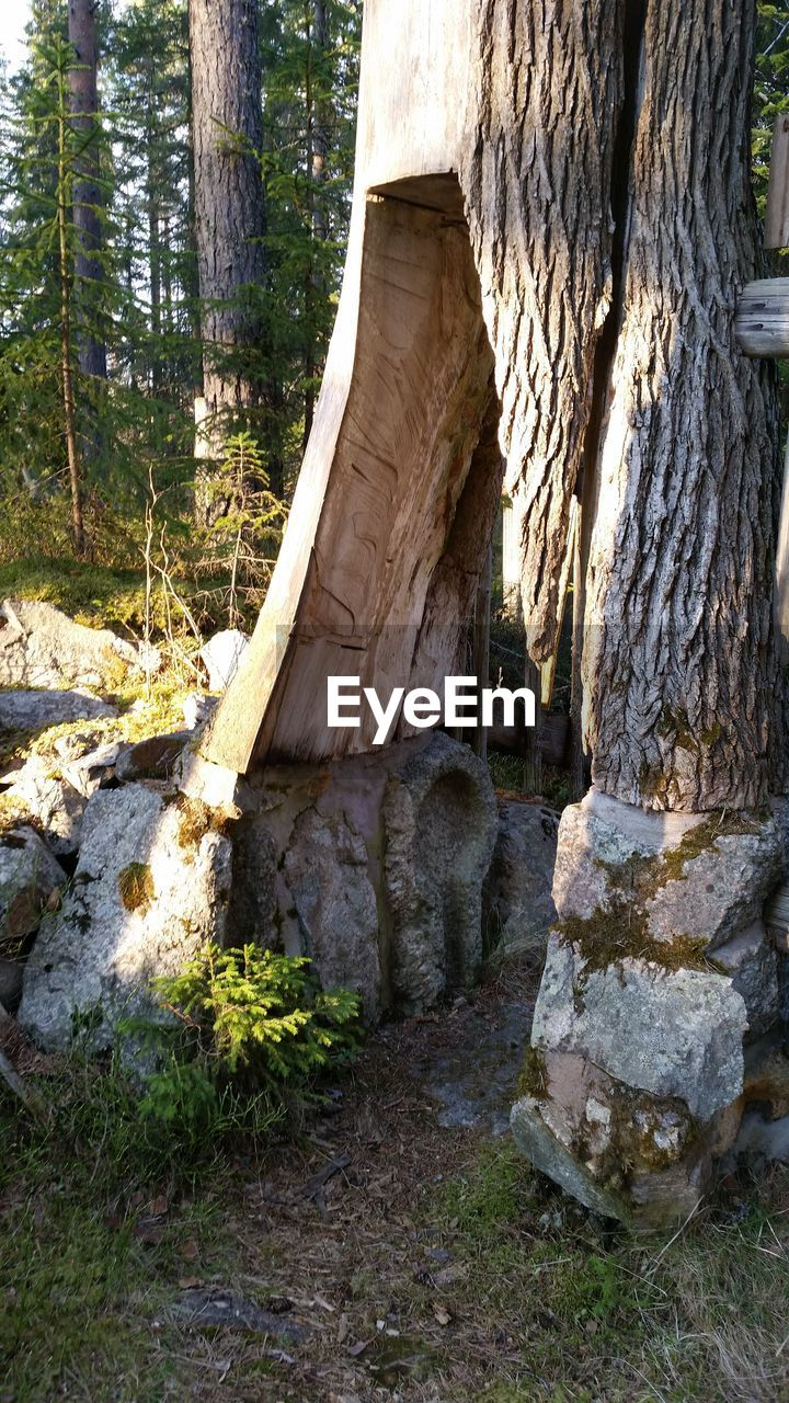 tree, tree trunk, day, no people, nature, outdoors, forest