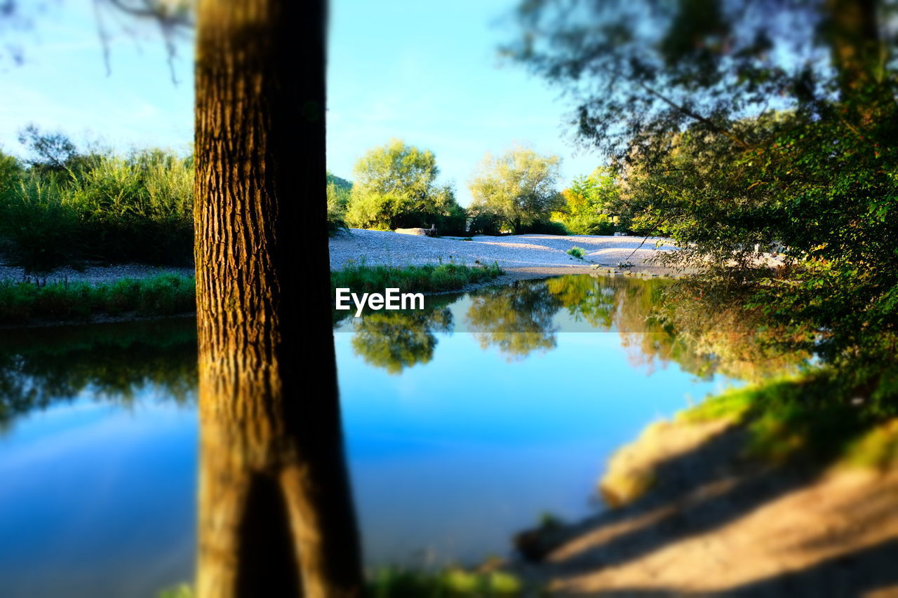 water, tree, plant, nature, lake, tranquility, selective focus, no people, tree trunk, trunk, tranquil scene, day, beauty in nature, reflection, sky, wood - material, outdoors, land, close-up, wooden post