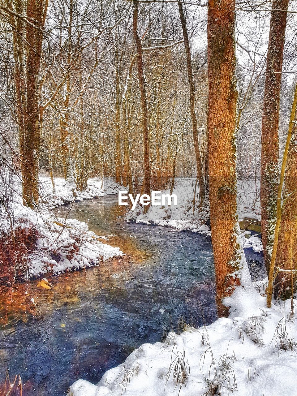tree, winter, cold temperature, snow, plant, tranquility, land, beauty in nature, nature, no people, forest, trunk, tree trunk, day, tranquil scene, bare tree, scenics - nature, non-urban scene, outdoors, woodland, stream - flowing water, flowing water, flowing