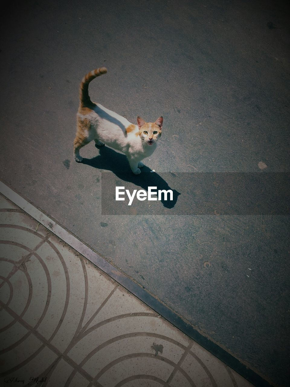 Elevated View Of Cat Looking At Camera