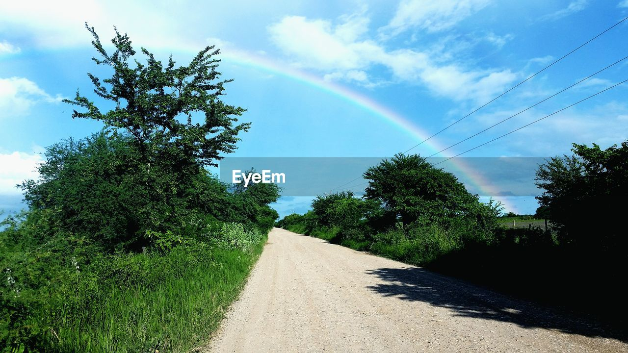 tree, nature, sky, road, the way forward, no people, day, beauty in nature, growth, outdoors, scenics, rainbow, landscape