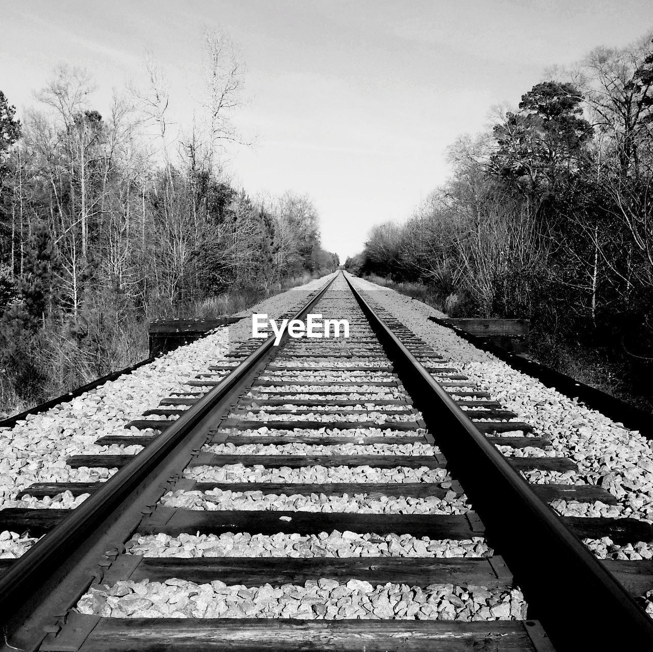 railroad track, rail transportation, transportation, diminishing perspective, the way forward, railroad tie, day, no people, tree, outdoors, straight, nature, beauty in nature, sky