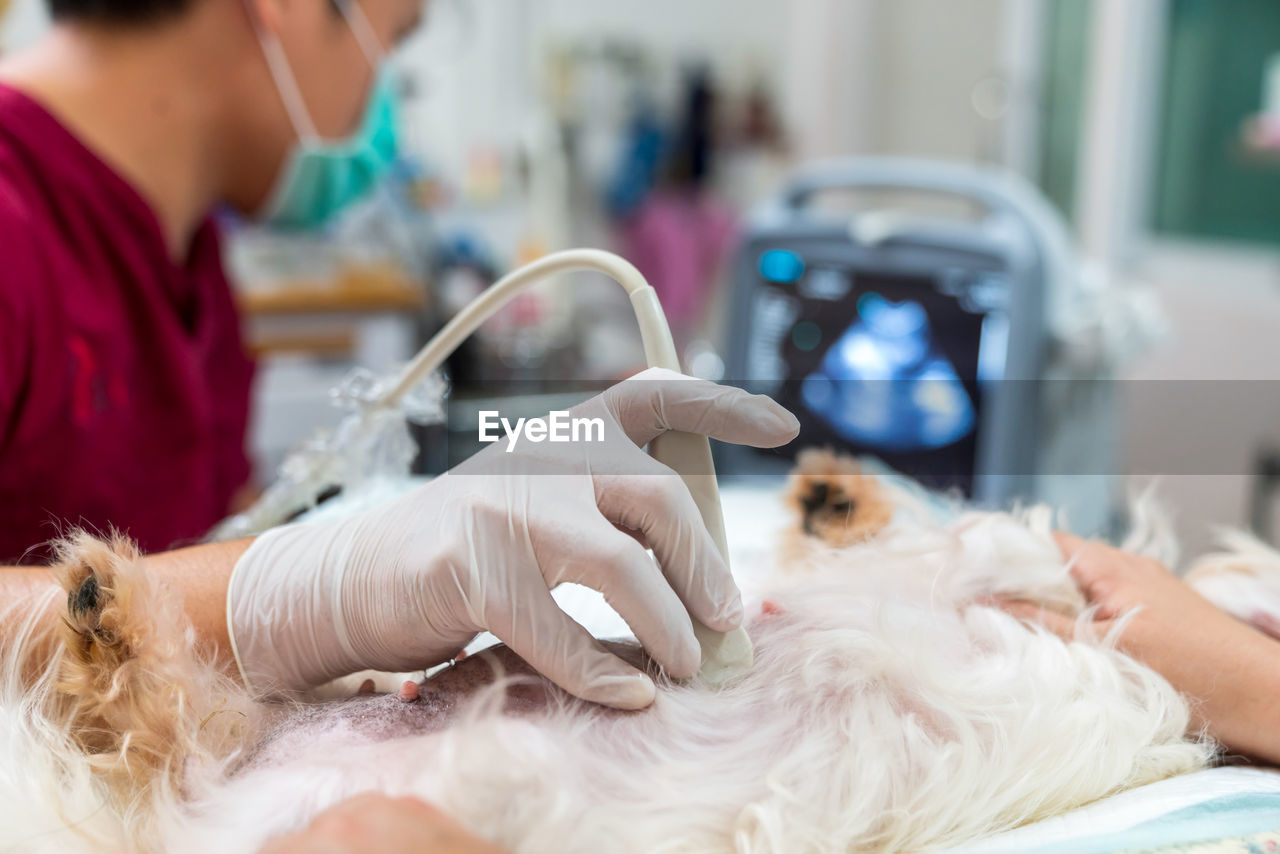Midsection of veterinarian examining dog at clinic
