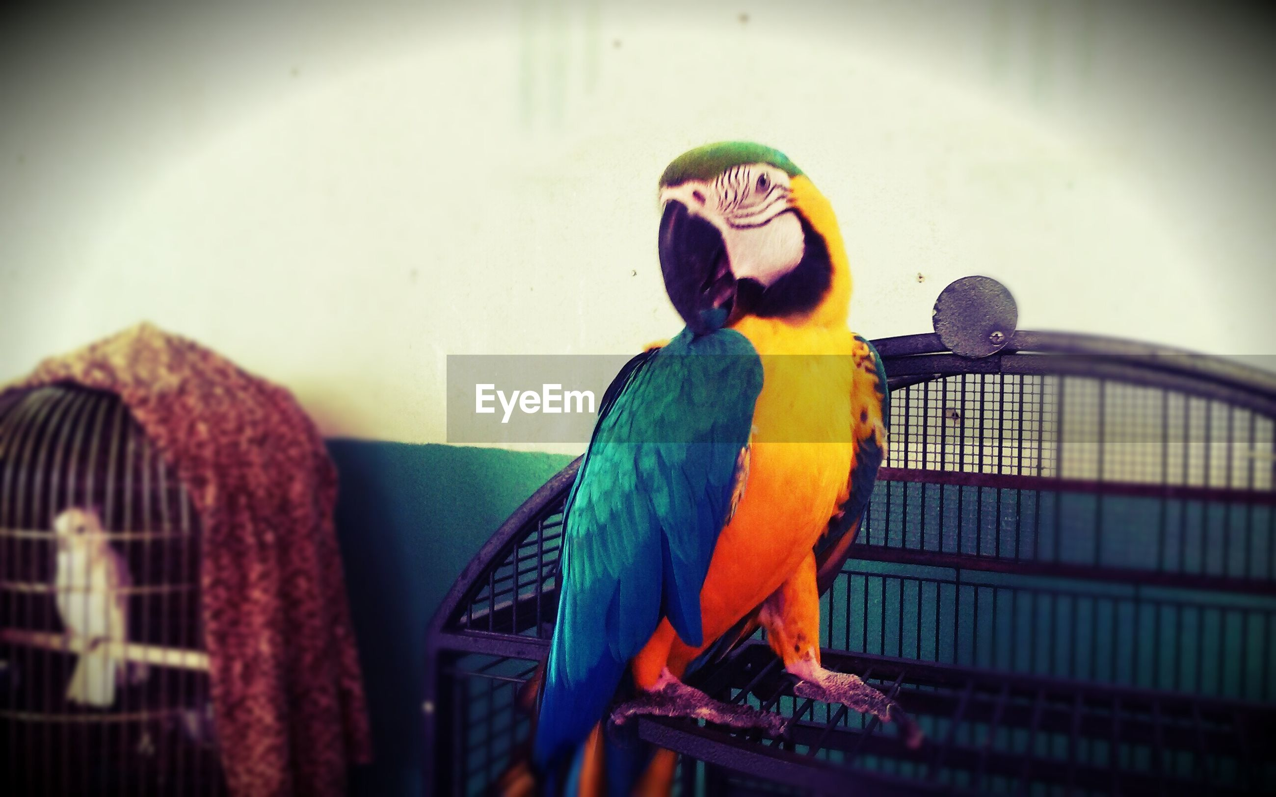 bird, indoors, low angle view, animal themes, one animal, built structure, art and craft, perching, art, architecture, animal representation, creativity, animals in the wild, wall - building feature, cage, no people, full length, wildlife, close-up, yellow
