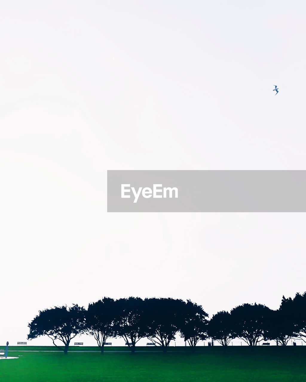 tree, copy space, clear sky, day, grass, nature, tranquility, no people, sky, outdoors, beauty in nature, flying, animal themes