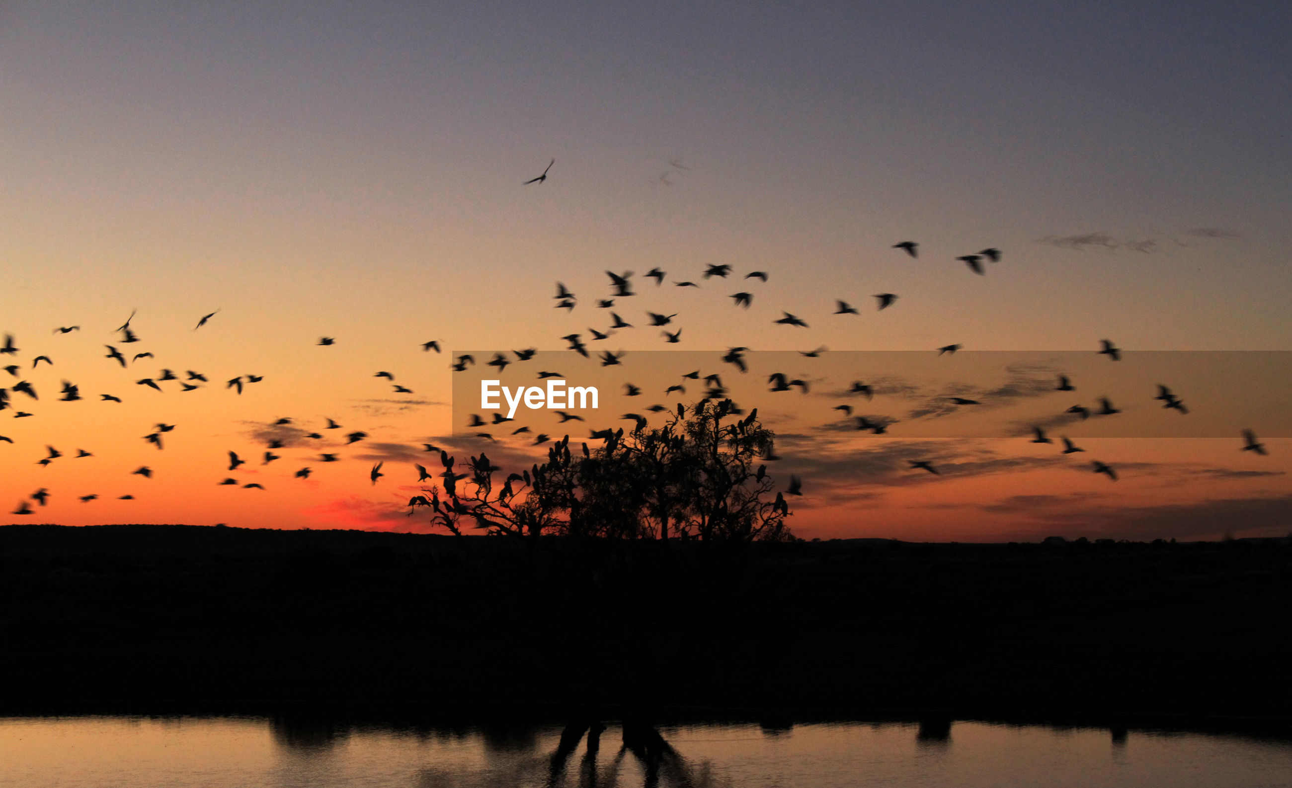 Silhouette birds flying over landscape against sky during sunset