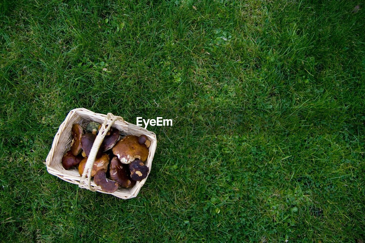 Directly Above Shot Of Mushrooms In Basket On Grassy Field