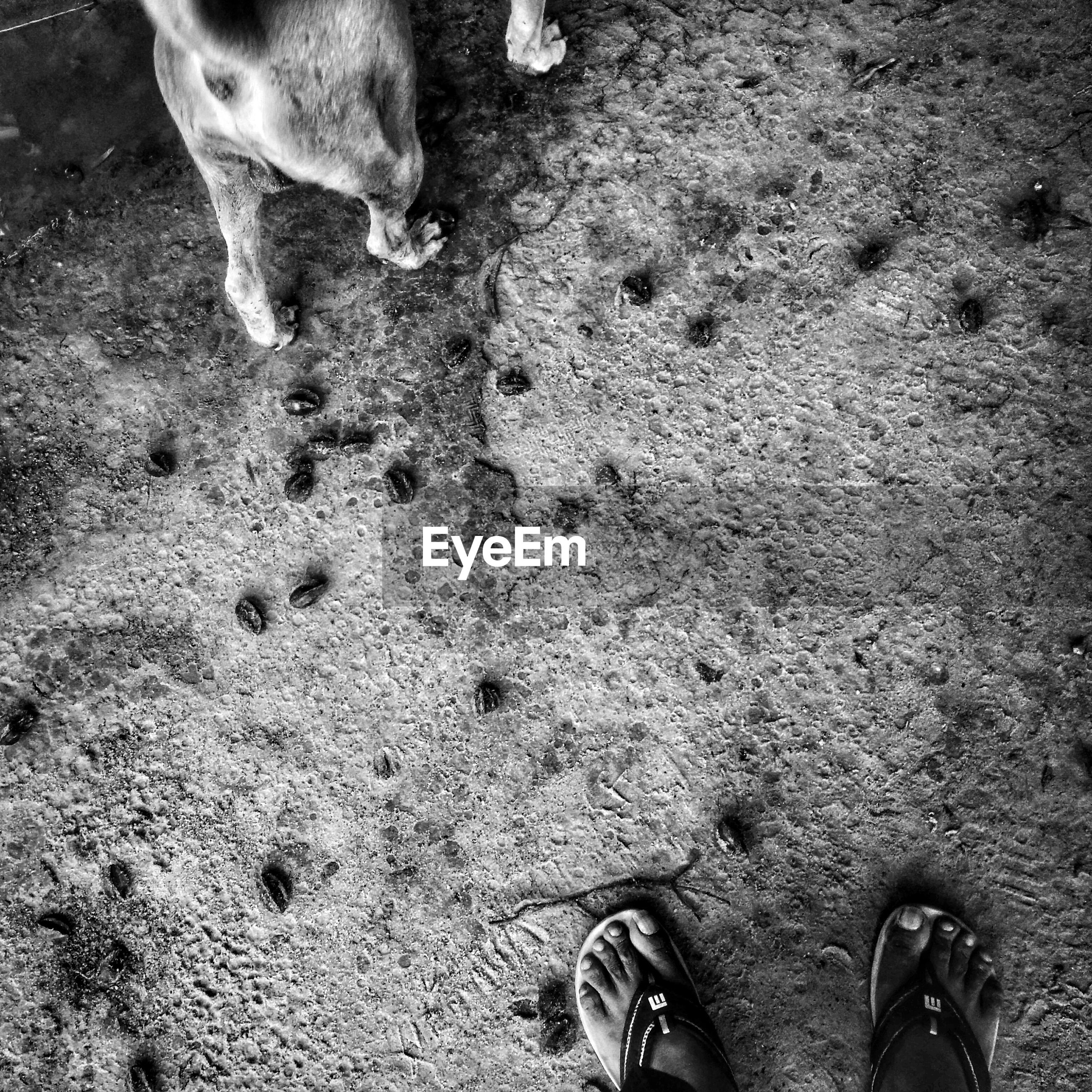 low section, person, high angle view, domestic animals, dog, mammal, pets, standing, personal perspective, human foot, unrecognizable person, lifestyles, part of, outdoors, day, leisure activity, grass, ground, nature, elevated view, dirty