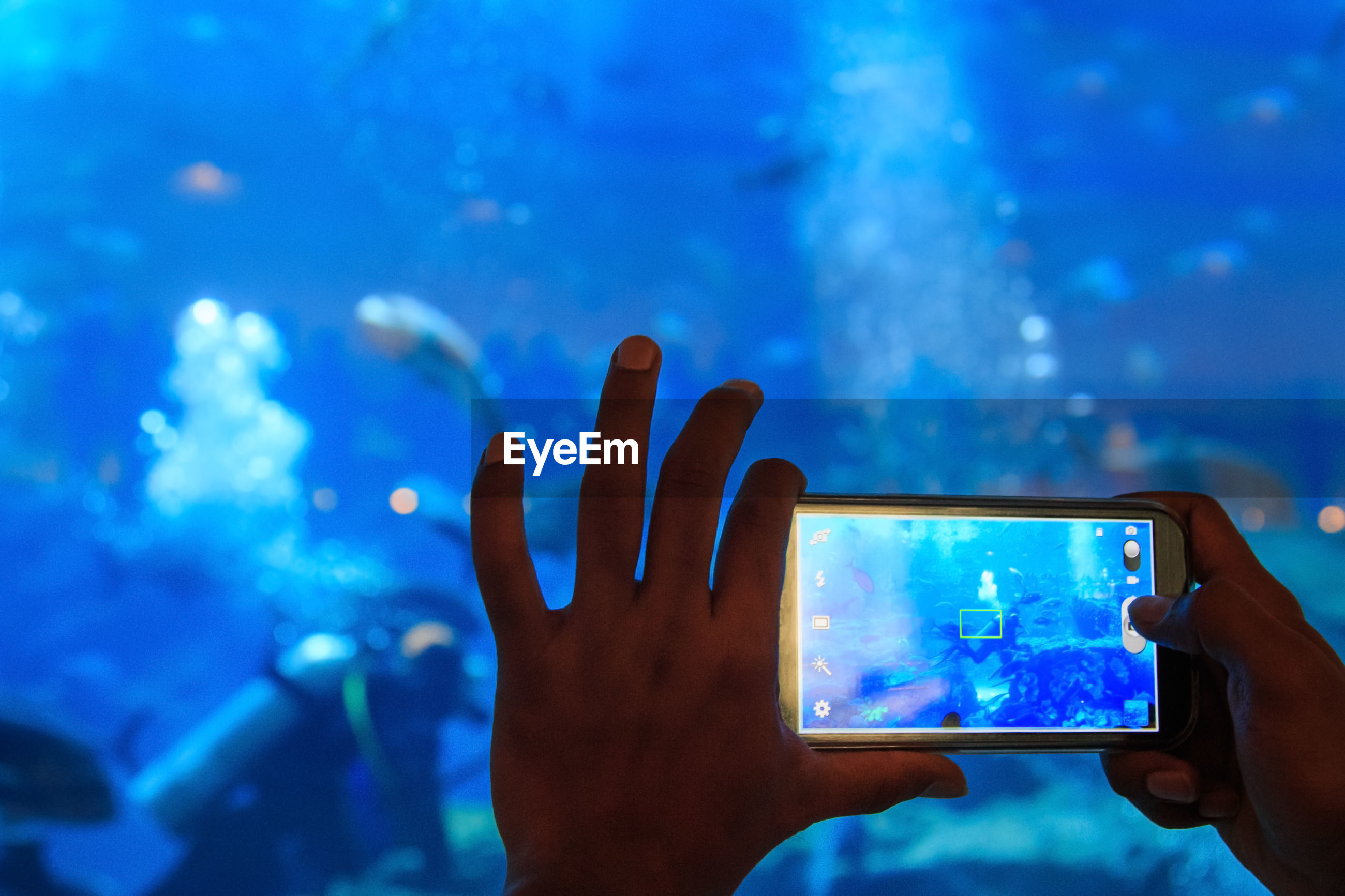 Cropped image of hands photographing scuba diver swimming in aquarium