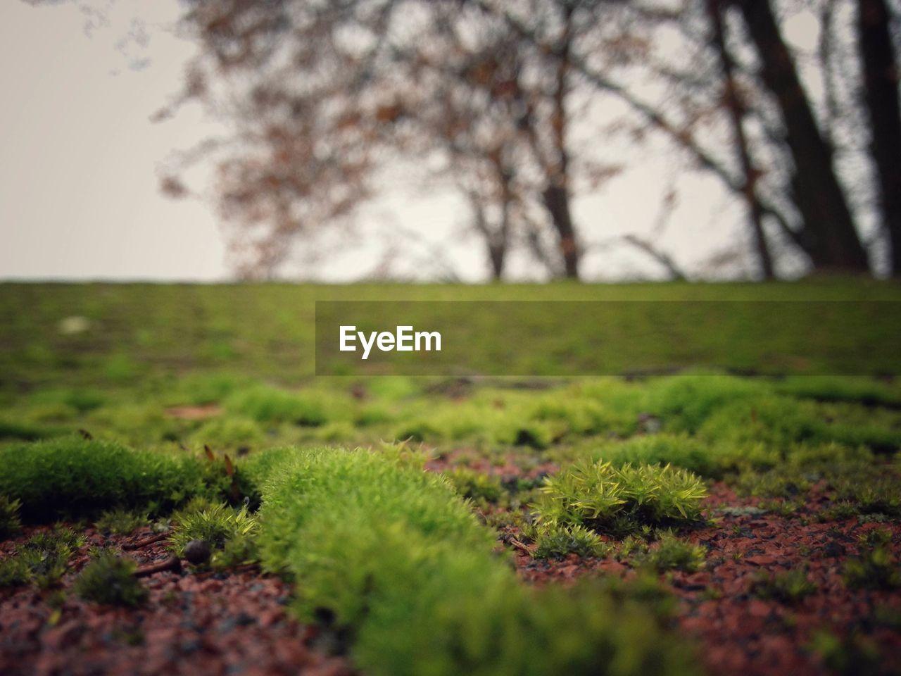 Moss growing on field