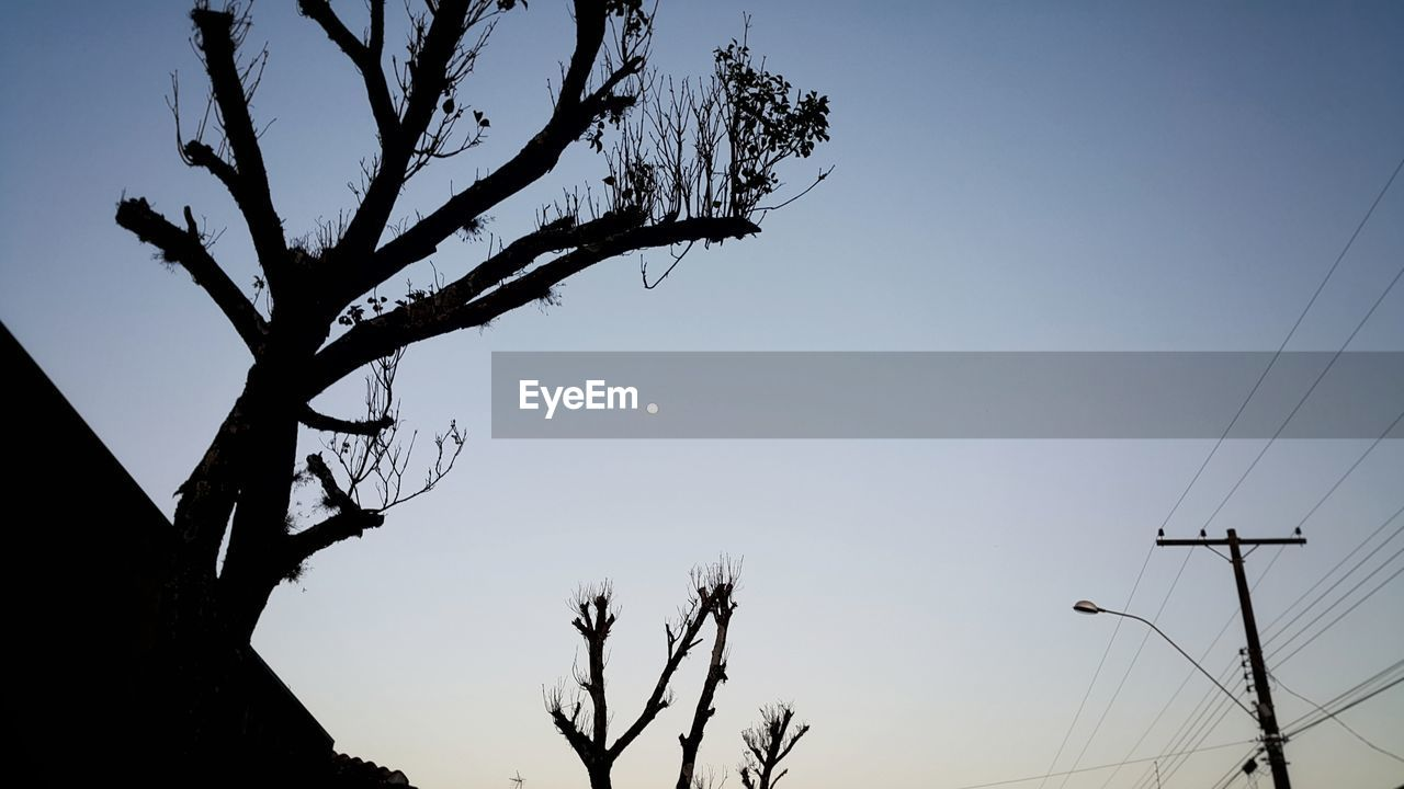 low angle view, tree, bare tree, nature, sky, silhouette, clear sky, connection, no people, beauty in nature, branch, outdoors, moon, technology, day