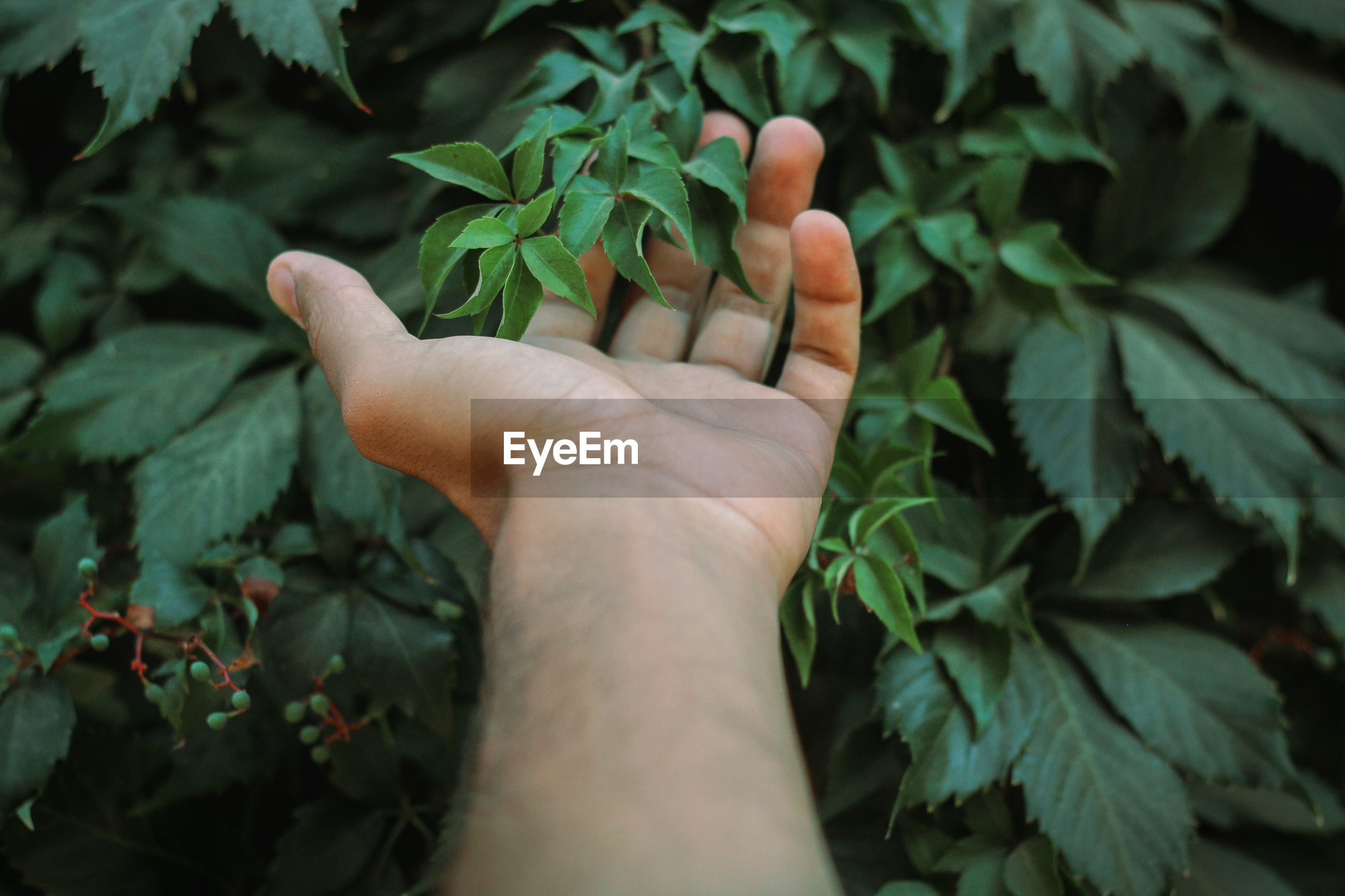 Cropped hand touching plants
