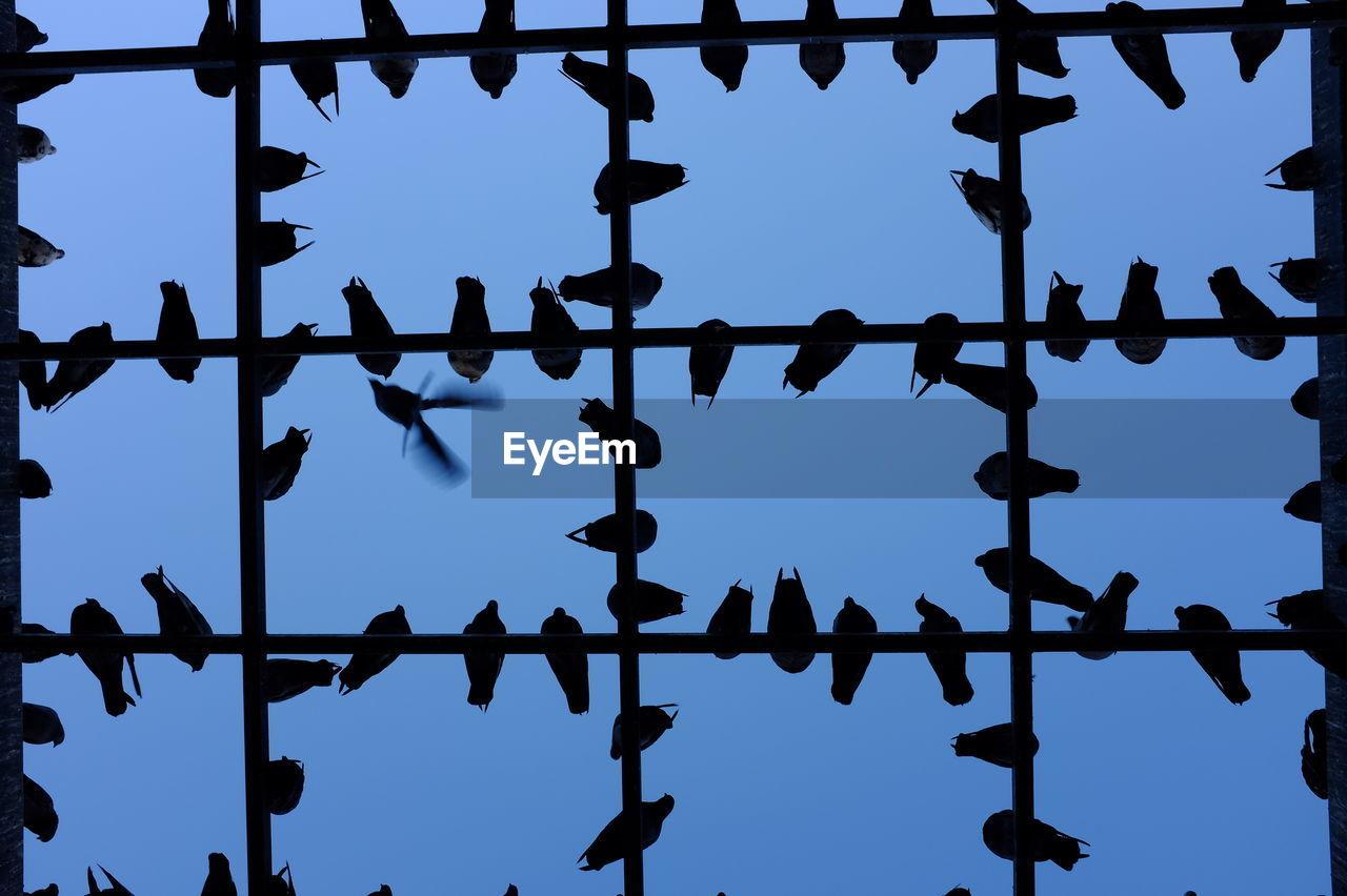 no people, low angle view, sky, silhouette, metal, pattern, blue, day, nature, outdoors, full frame, protection, backgrounds, safety, boundary, fence, focus on foreground, close-up, security, lighting equipment