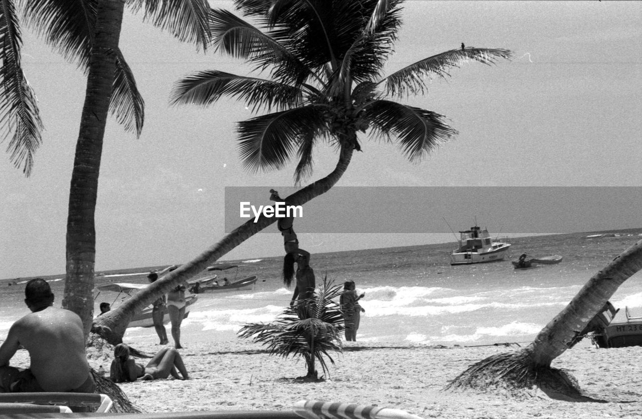 palm tree, beach, sea, tree, water, sand, nature, real people, tree trunk, men, scenics, beauty in nature, outdoors, lifestyles, horizon over water, day, working, rope swing, sky, people, adult