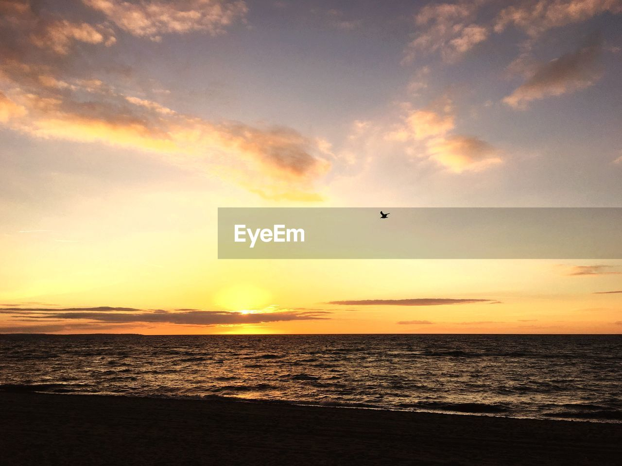 sunset, sea, beauty in nature, scenics, water, nature, sky, silhouette, horizon over water, tranquil scene, tranquility, sun, flying, beach, outdoors, bird, mid-air, no people, animal themes, day