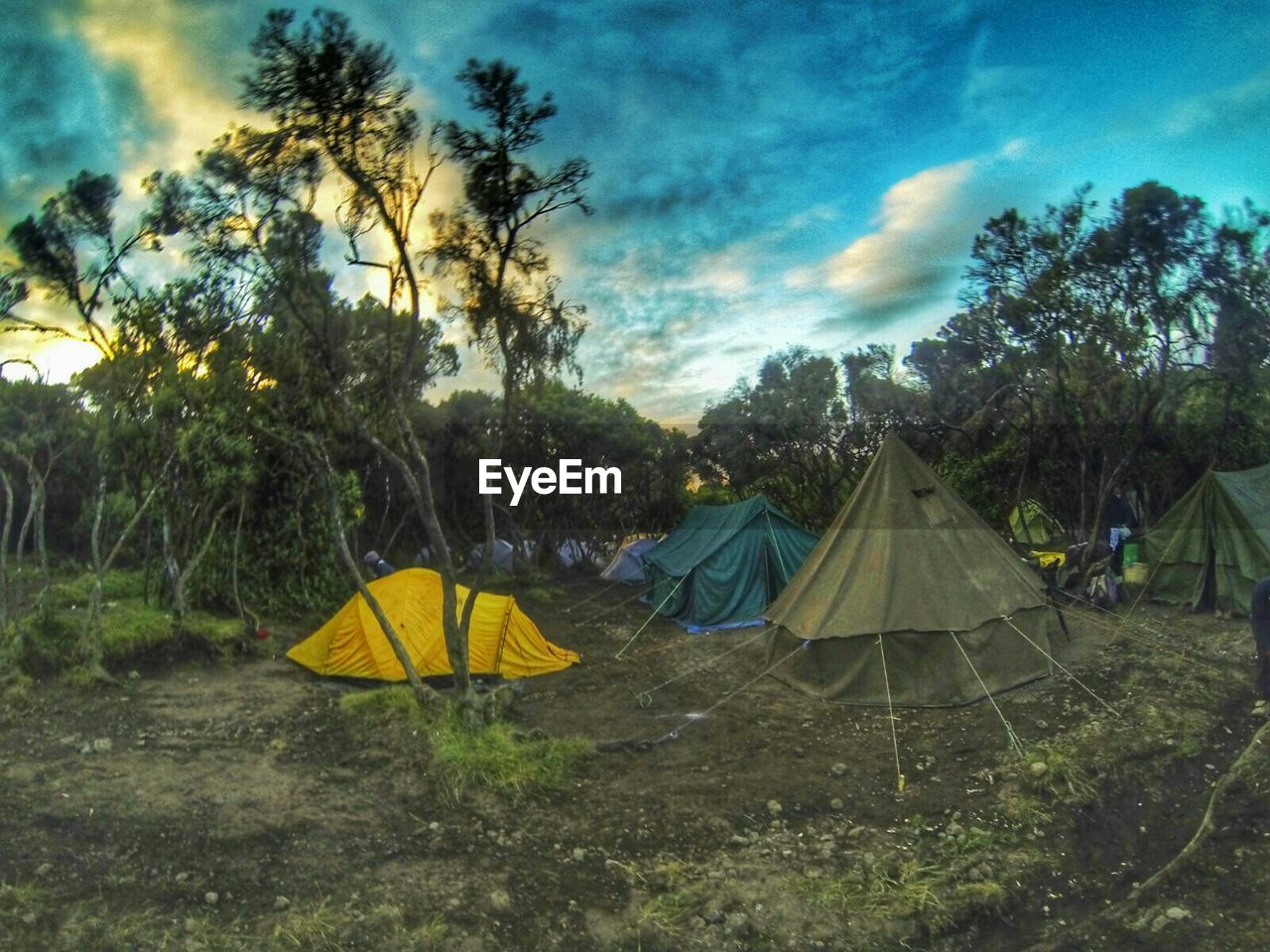 tent, tree, camping, shelter, yellow, sky, outdoors, cloud - sky, day, grass, no people, beauty in nature, nature