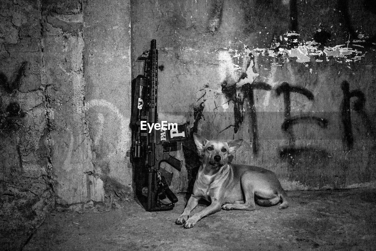 DOG SITTING BY WALL