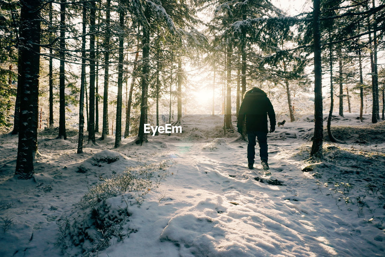 Rear View Of Man Walking In Snow Covered Forest