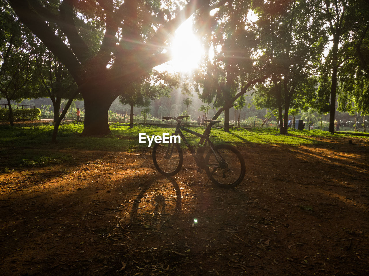 tree, sunlight, plant, bicycle, nature, sunbeam, lens flare, land, transportation, field, land vehicle, mode of transportation, sun, grass, tranquility, day, park, growth, sunny, sky, no people, outdoors, bright