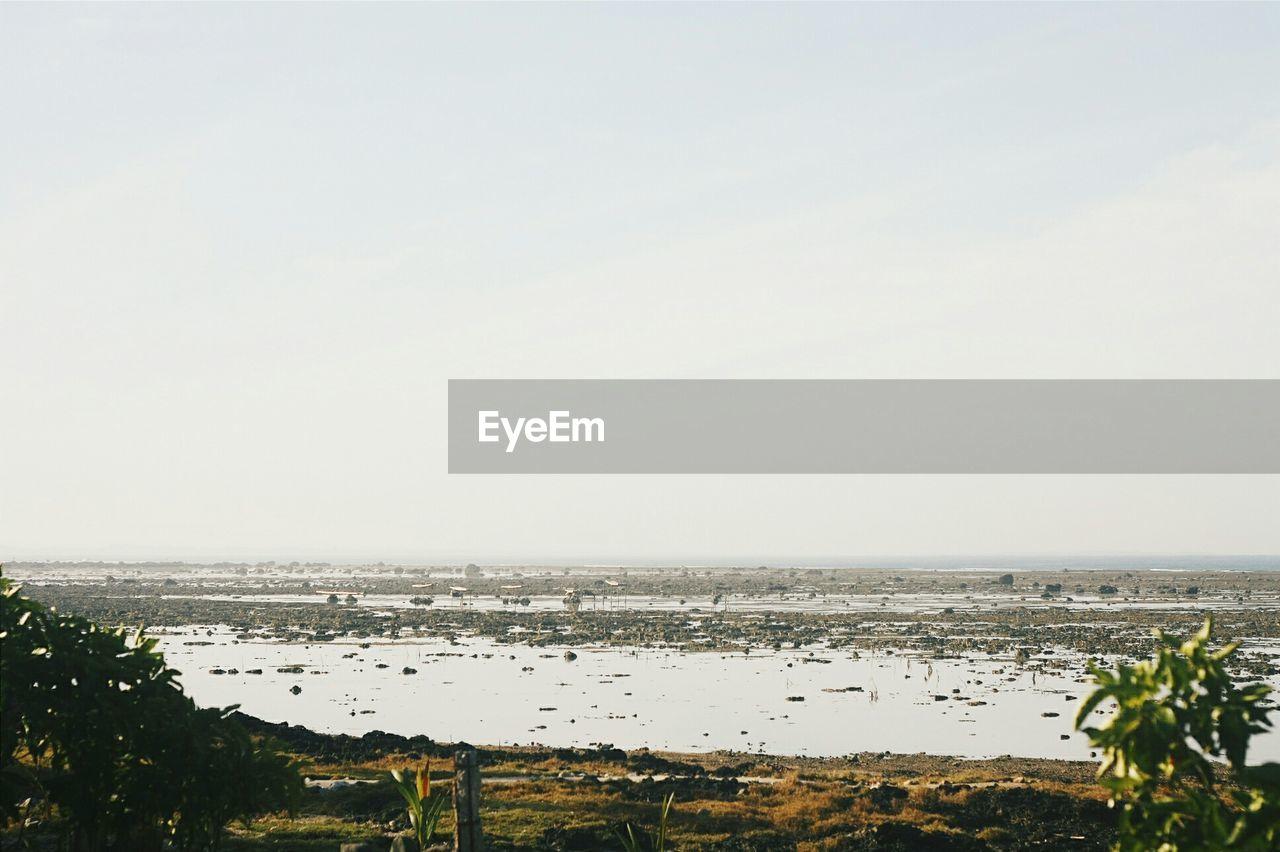 View of marsh