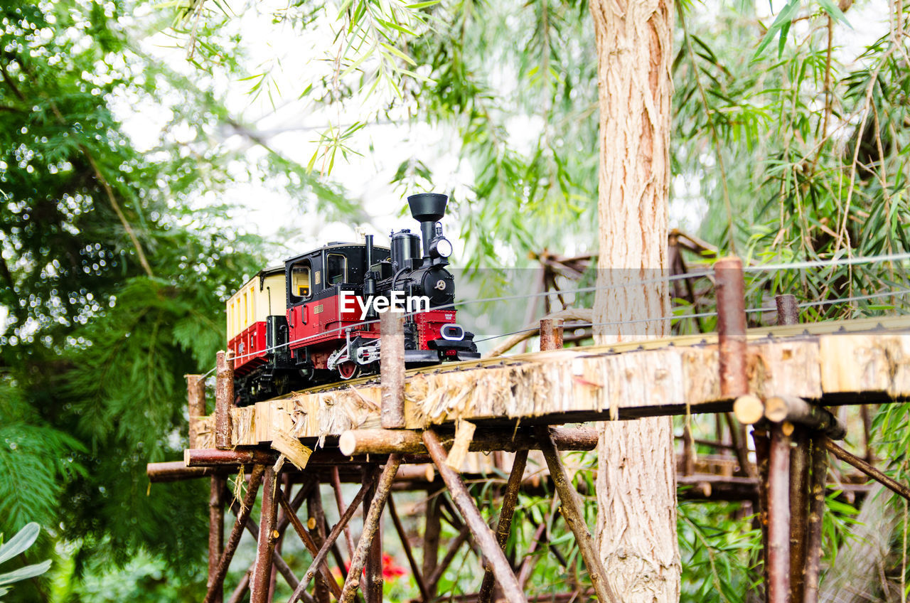 tree, plant, wood - material, nature, transportation, day, mode of transportation, forest, land, outdoors, no people, land vehicle, green color, focus on foreground, sunlight, wood, growth, travel, selective focus, rail transportation