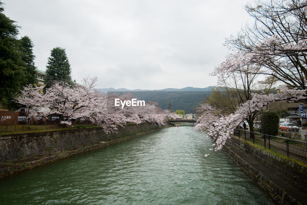 tree, water, plant, sky, built structure, architecture, canal, beauty in nature, nature, cloud - sky, day, transportation, waterfront, no people, building exterior, scenics - nature, tranquility, flower, outdoors, springtime, cherry blossom