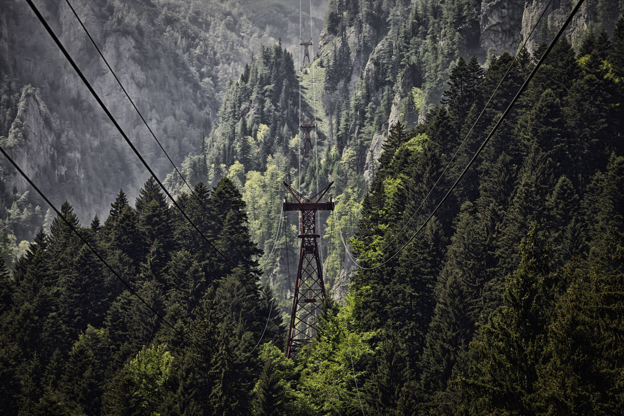Electricity Pylons Amidst Trees In Forest