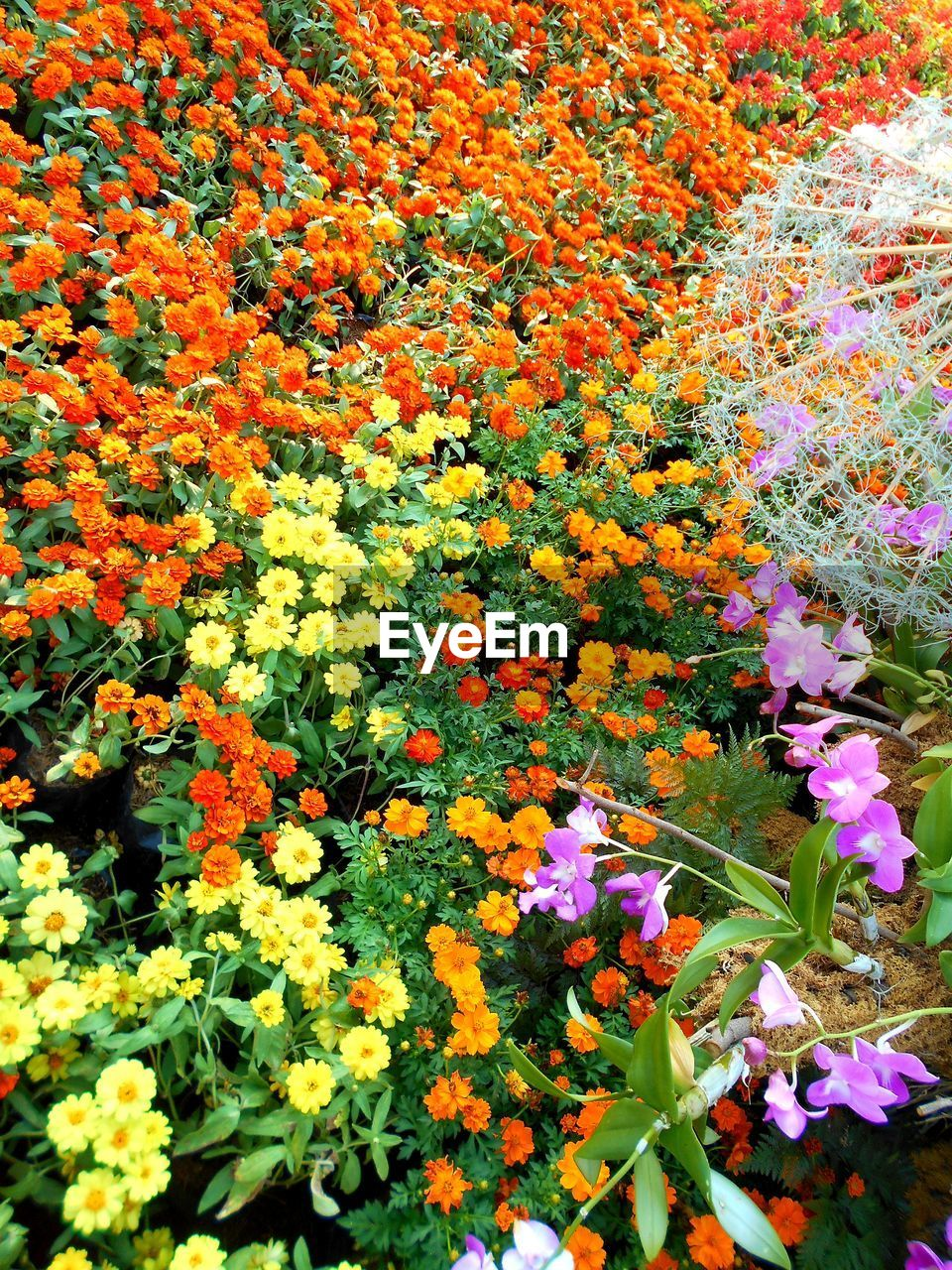 flower, growth, freshness, beauty in nature, fragility, nature, no people, day, plant, multi colored, outdoors, blooming, flower head, close-up
