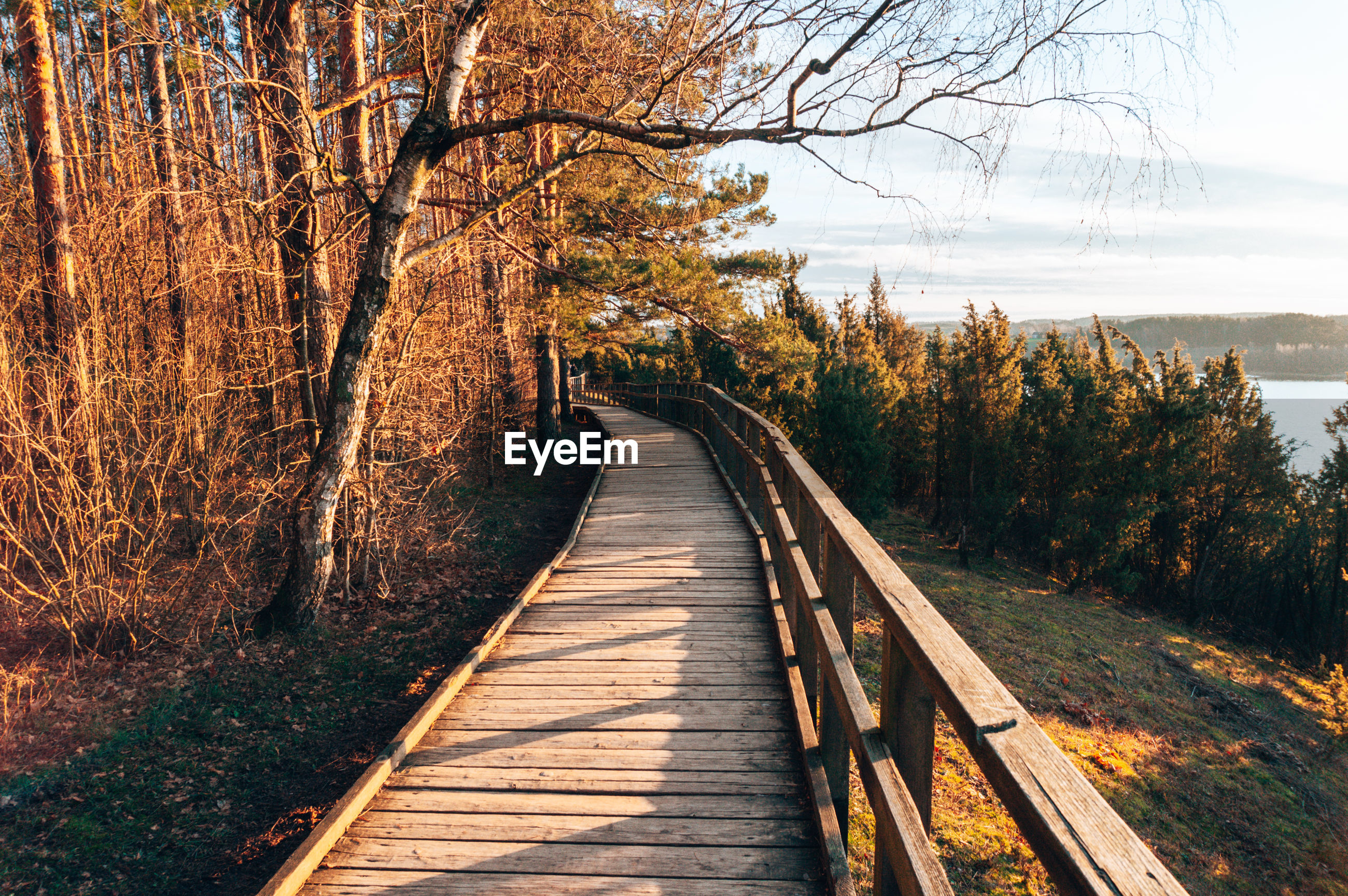 Boardwalk amidst trees in forest during autumn