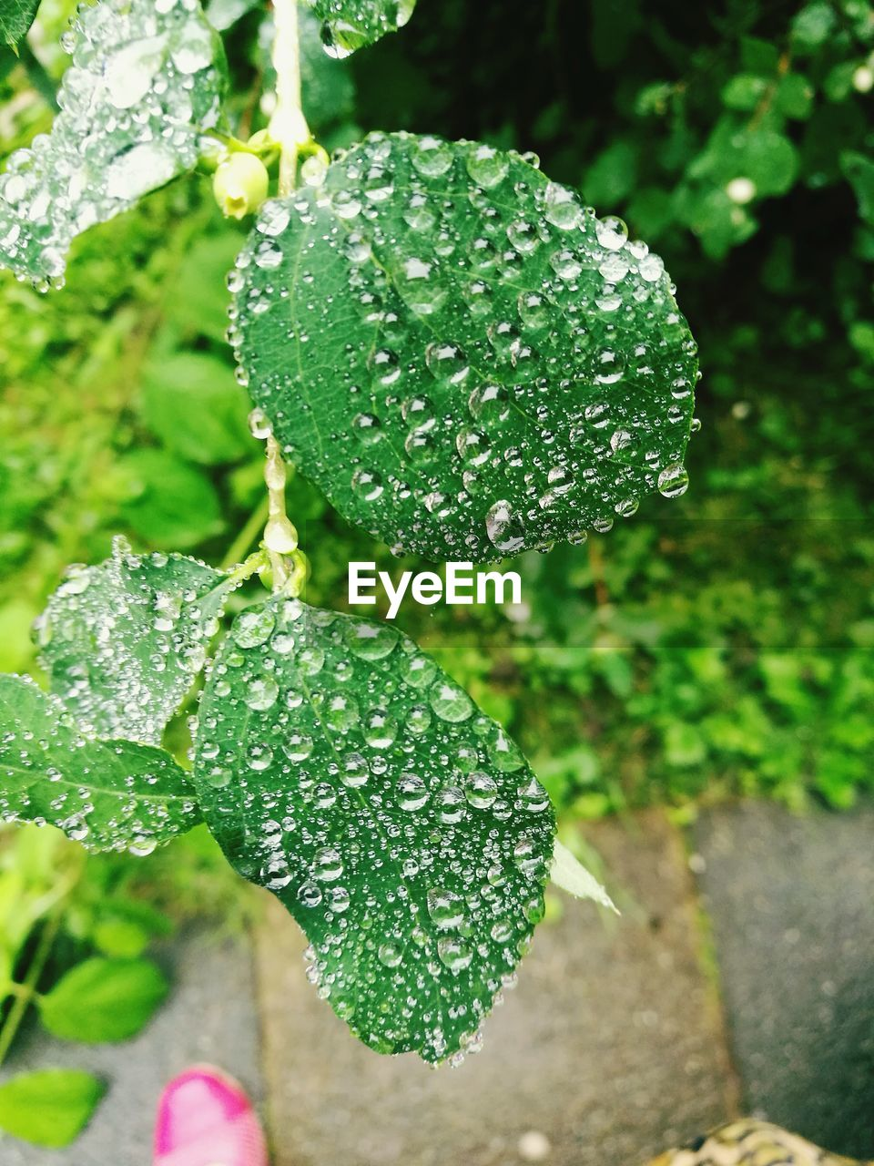drop, green color, growth, water, wet, nature, close-up, freshness, leaf, beauty in nature, day, raindrop, outdoors, plant, no people, fragility