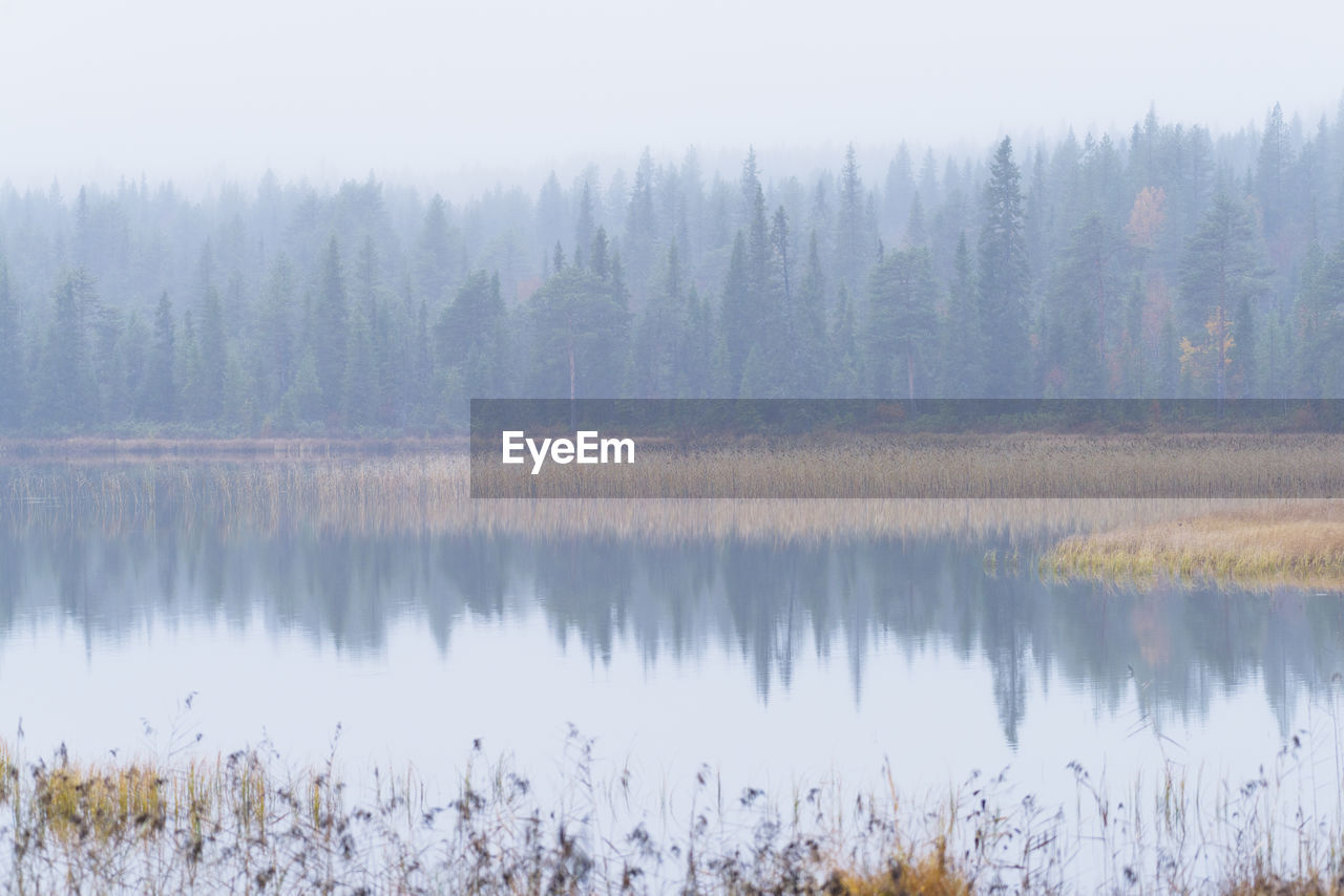 SCENIC VIEW OF LAKE BY TREES DURING FOGGY WEATHER