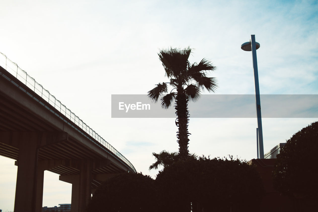 sky, palm tree, tree, tropical climate, plant, low angle view, nature, built structure, architecture, no people, cloud - sky, street, street light, building exterior, growth, silhouette, outdoors, day, sunset, lighting equipment, architectural column, coconut palm tree