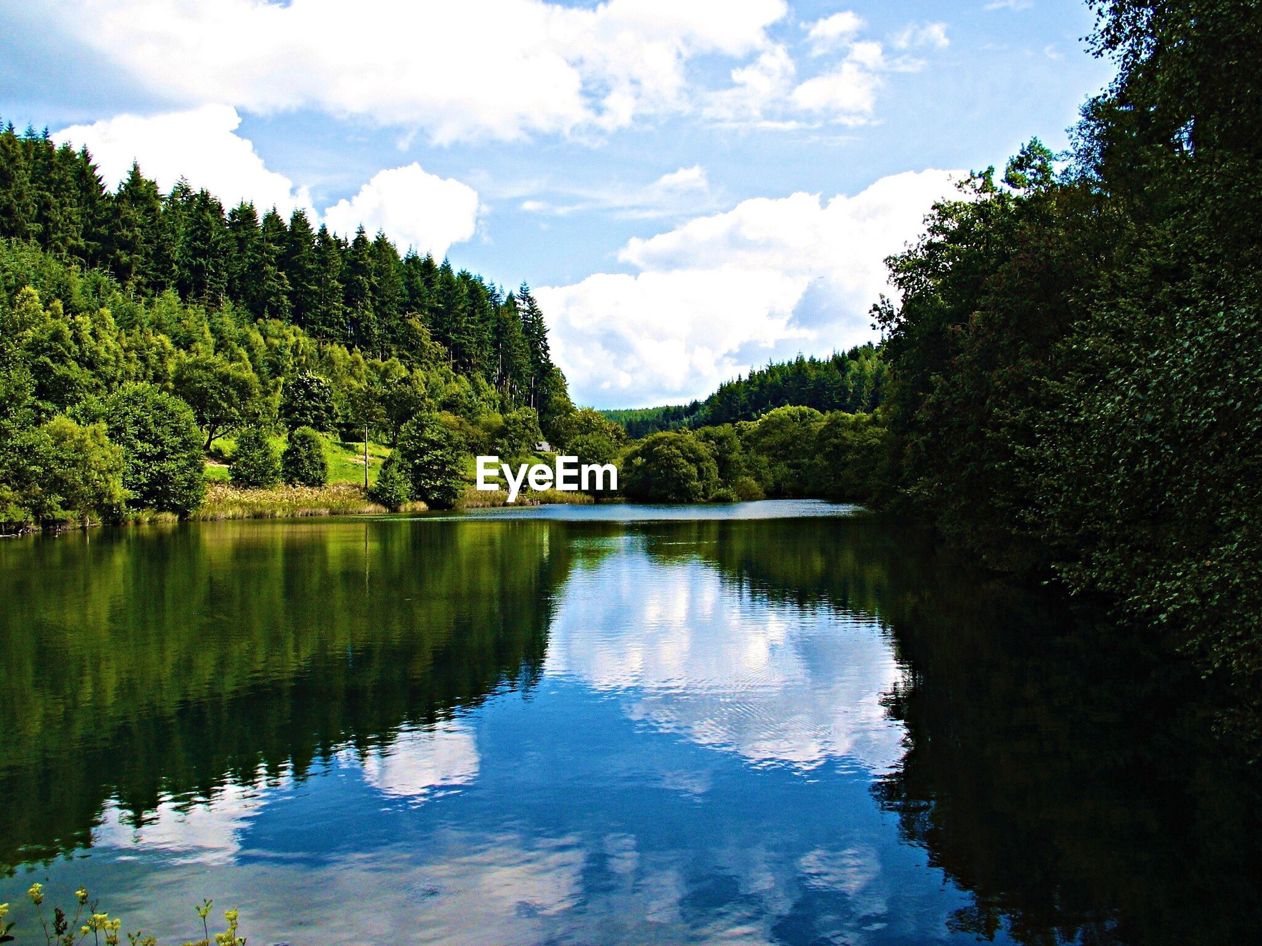 View of lake in forest