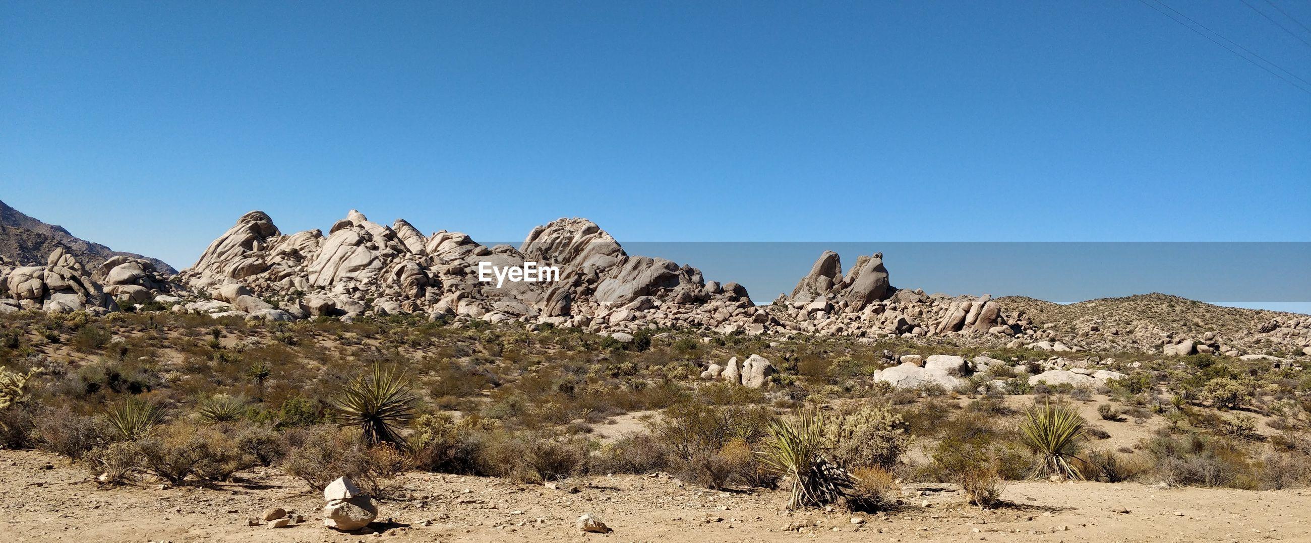 VIEW OF PLANTS IN DESERT