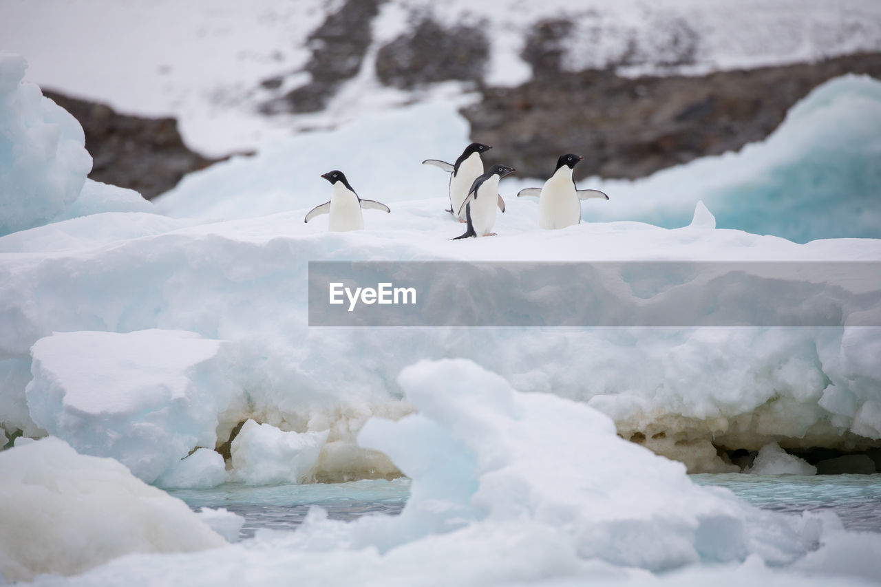 Low angle view of penguins on ice berg against sky