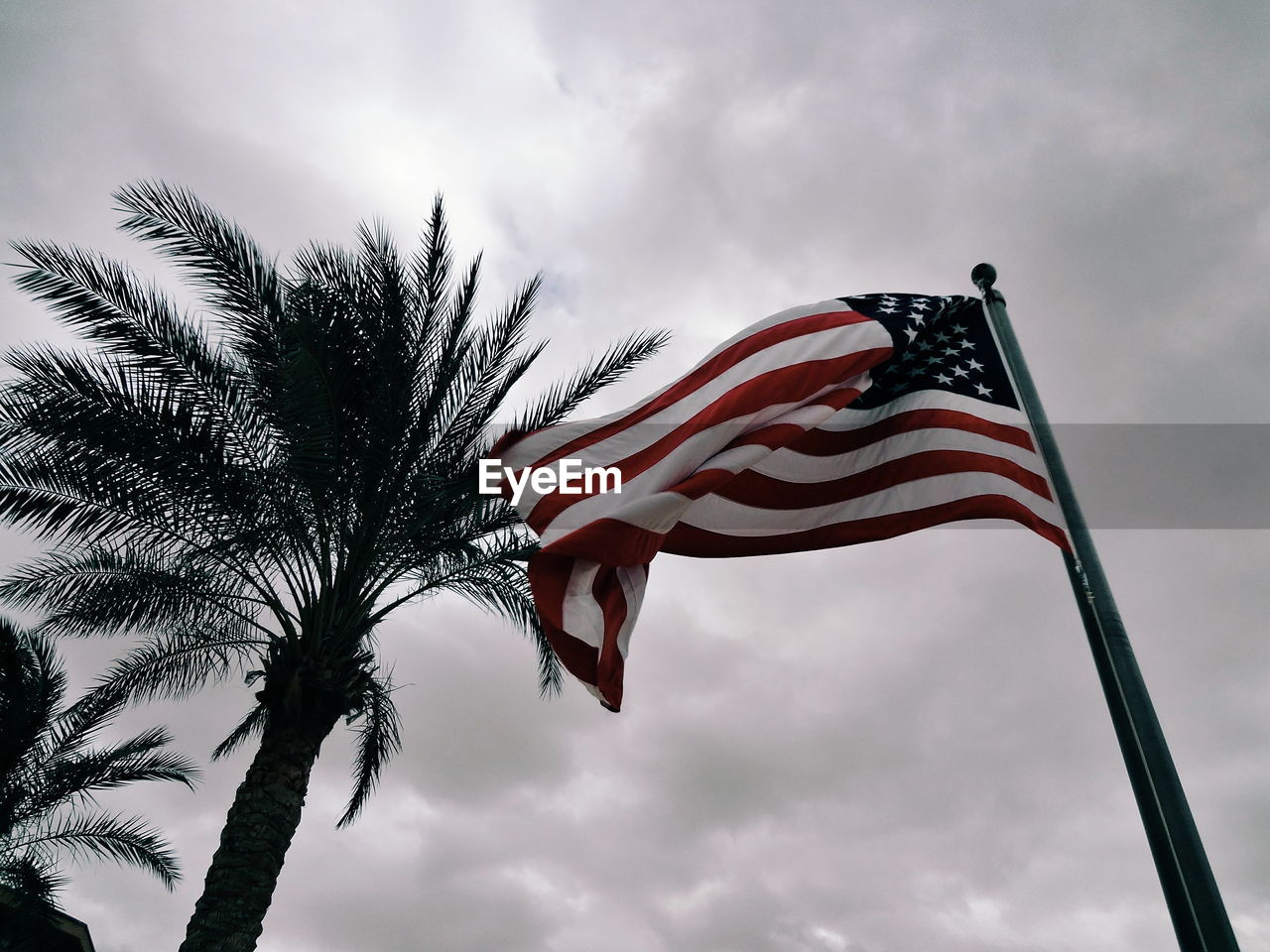 Low Angle View Of American Flag And Palm Trees Against Sky