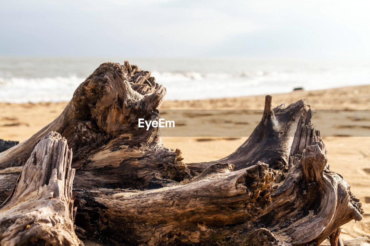land, beach, wood - material, driftwood, focus on foreground, sea, nature, sky, wood, tranquility, close-up, no people, sand, water, beauty in nature, scenics - nature, day, tree, horizon, outdoors, dead plant, horizon over water, bark