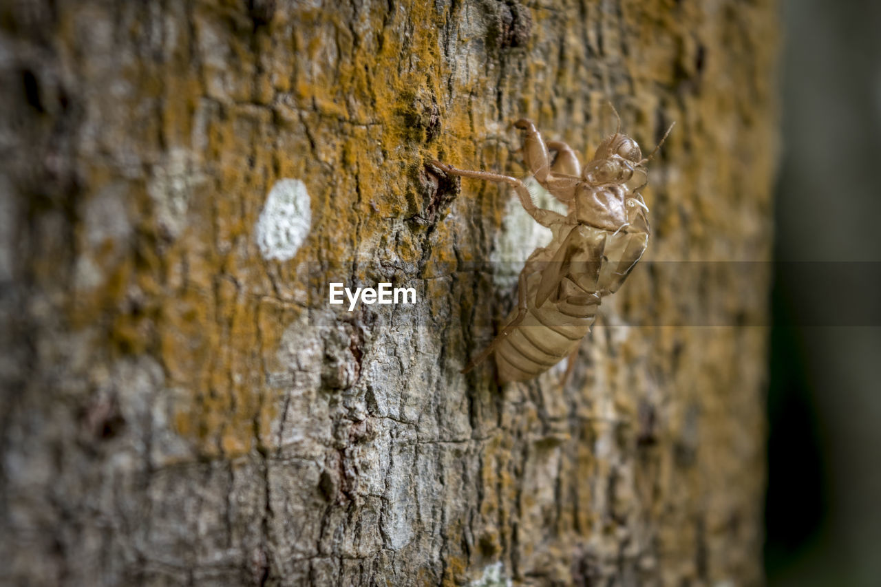 invertebrate, tree trunk, trunk, insect, animals in the wild, animal wildlife, animal themes, animal, textured, close-up, no people, one animal, nature, wood - material, day, focus on foreground, tree, outdoors, plant, selective focus, bark, butterfly - insect