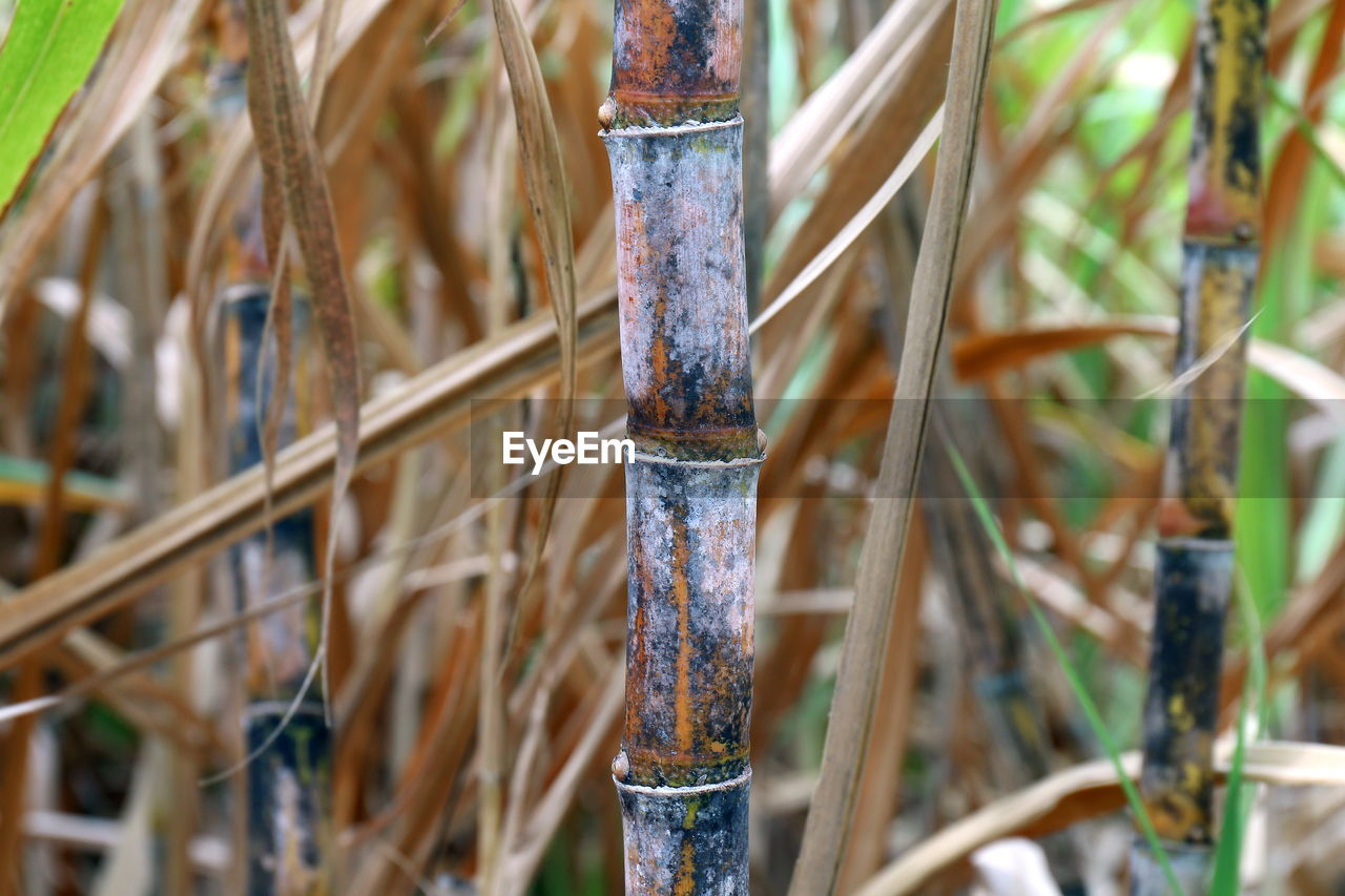 close-up, plant, nature, no people, selective focus, focus on foreground, day, outdoors, wood - material, bamboo, paint, creativity, growth, art and craft, bamboo - plant, boundary, craft, land, paintbrush, brush, art and craft equipment